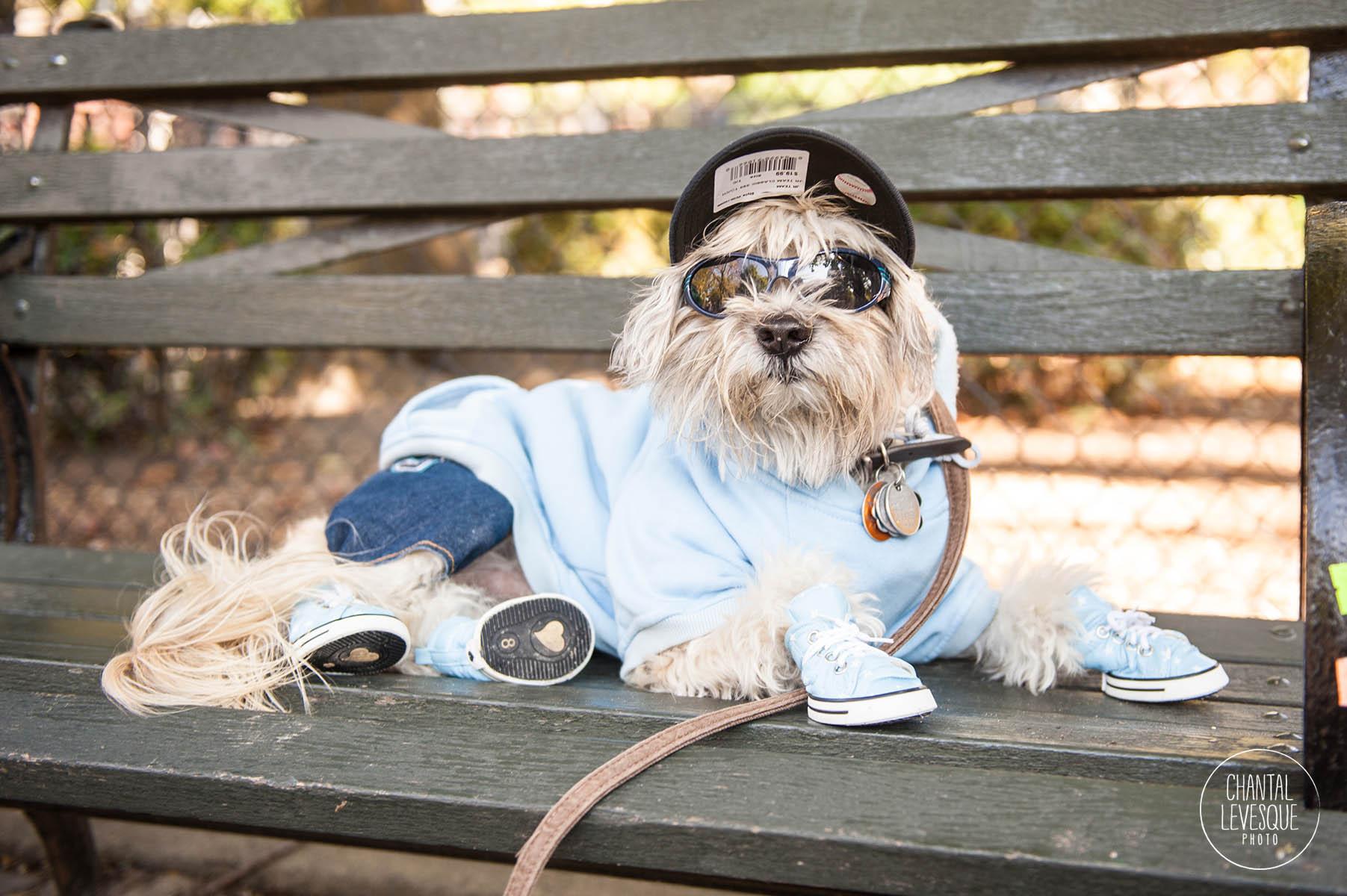 puppy-costume-halloween