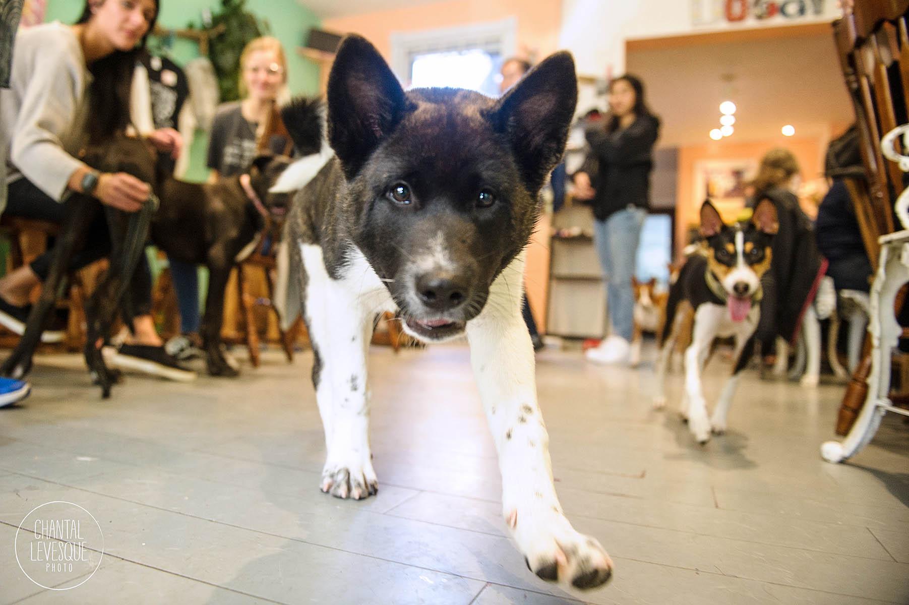 Doggy-casting-basenji-9791.jpg