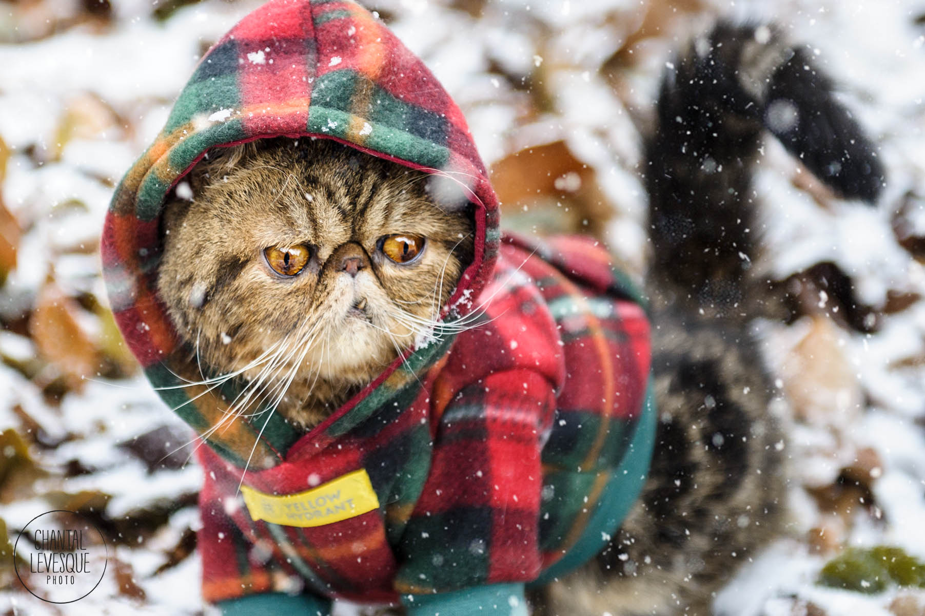 Montreal-cat-photographer.jpg