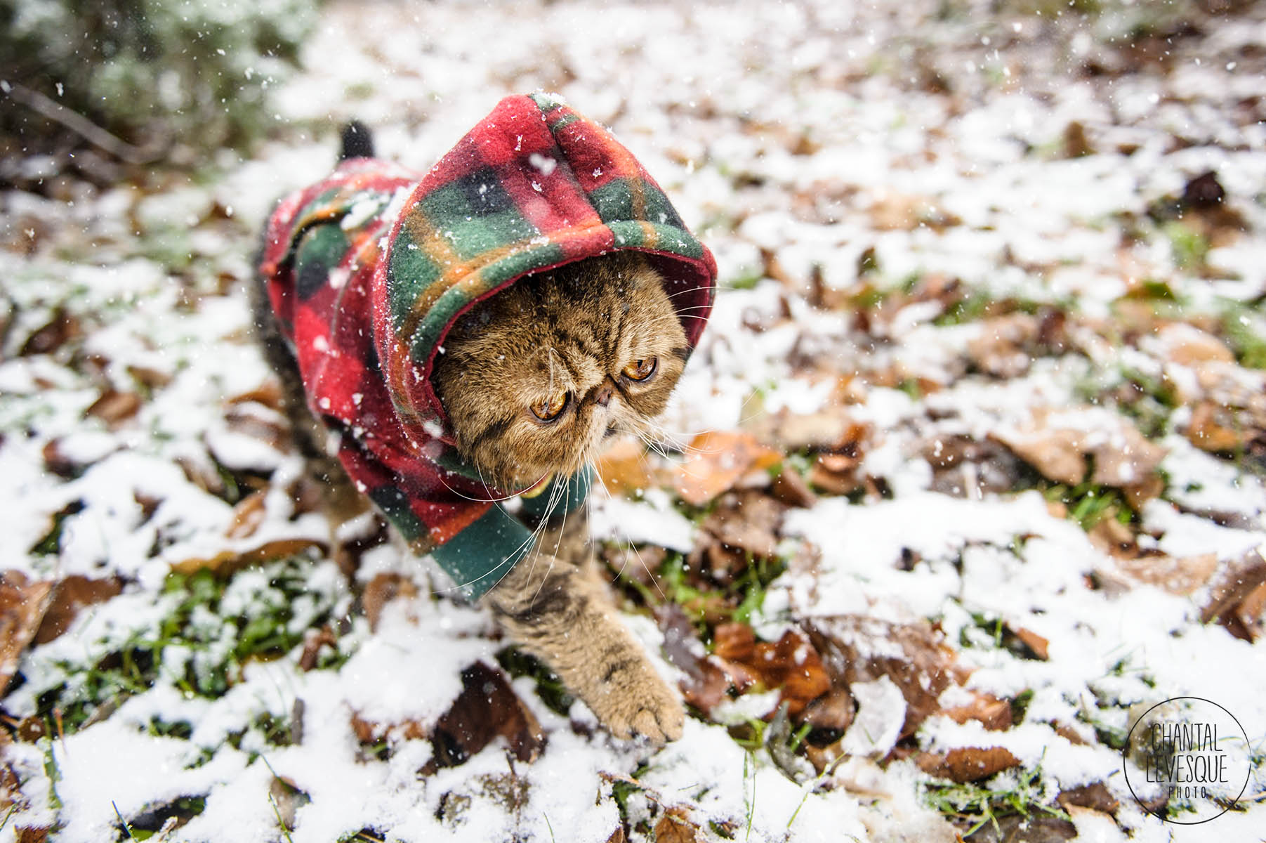 lifestyle-cat-photography-canada.jpg