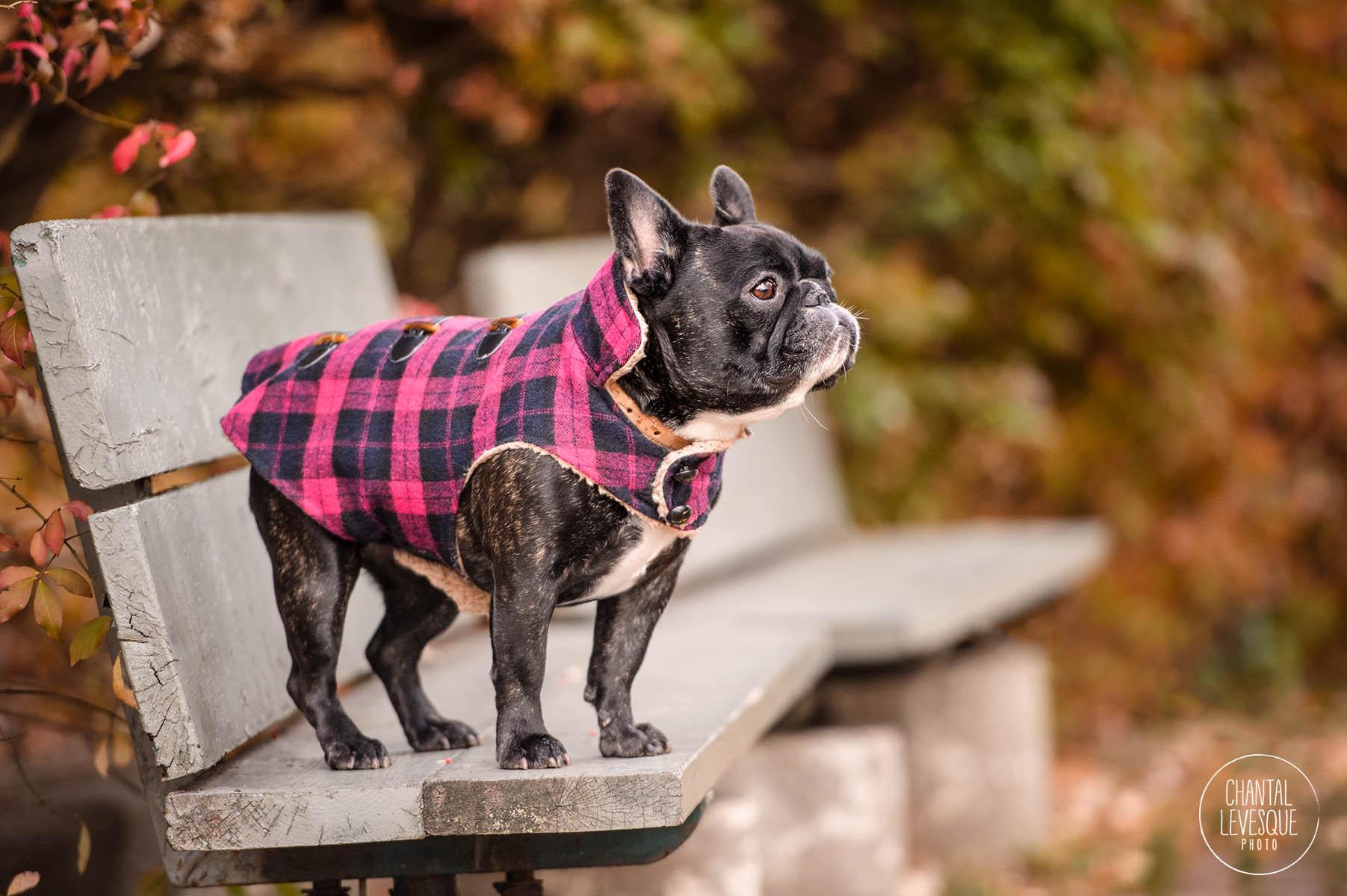 photographe-professionnelle-chiens.jpg