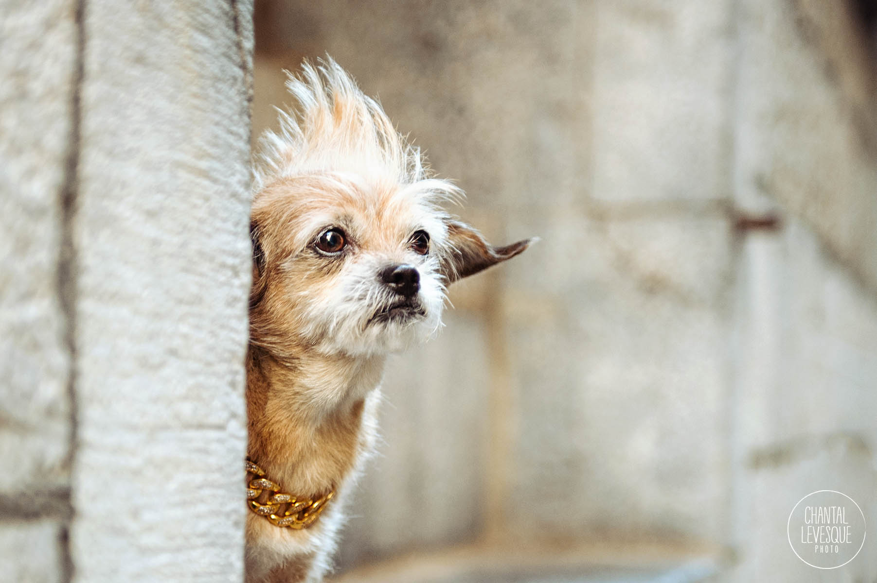 professional-dog-photography-montreal.jpg