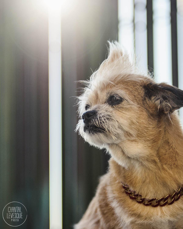 dog-portrait-old-Montreal.jpg