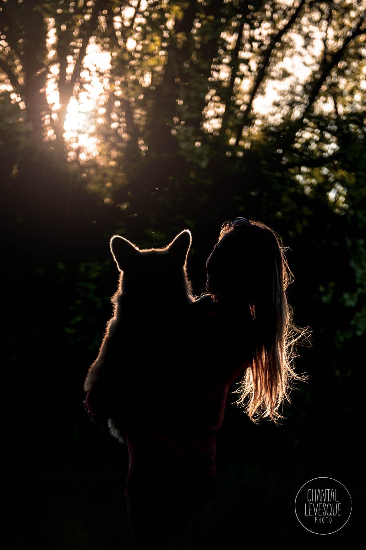 corgi-sunset-photography-quebec.jpg