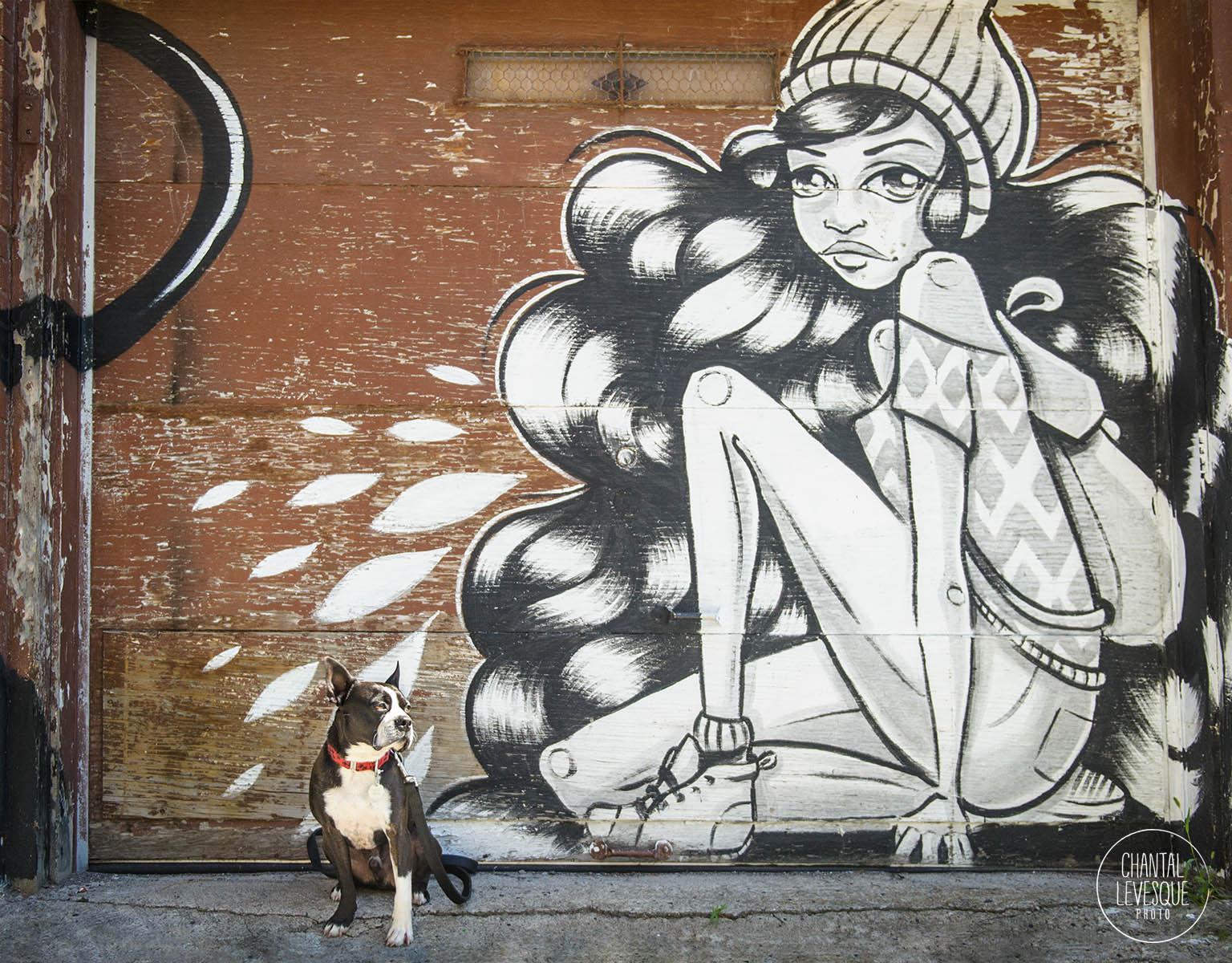 boston-terrier-street-art-photo.jpg
