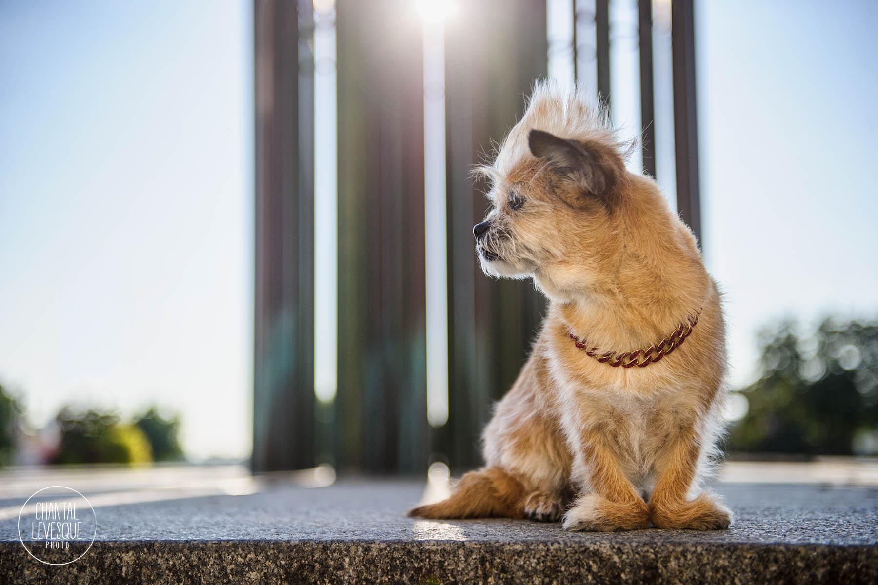 rescue-puppy-fashion-photo-montreal.jpg