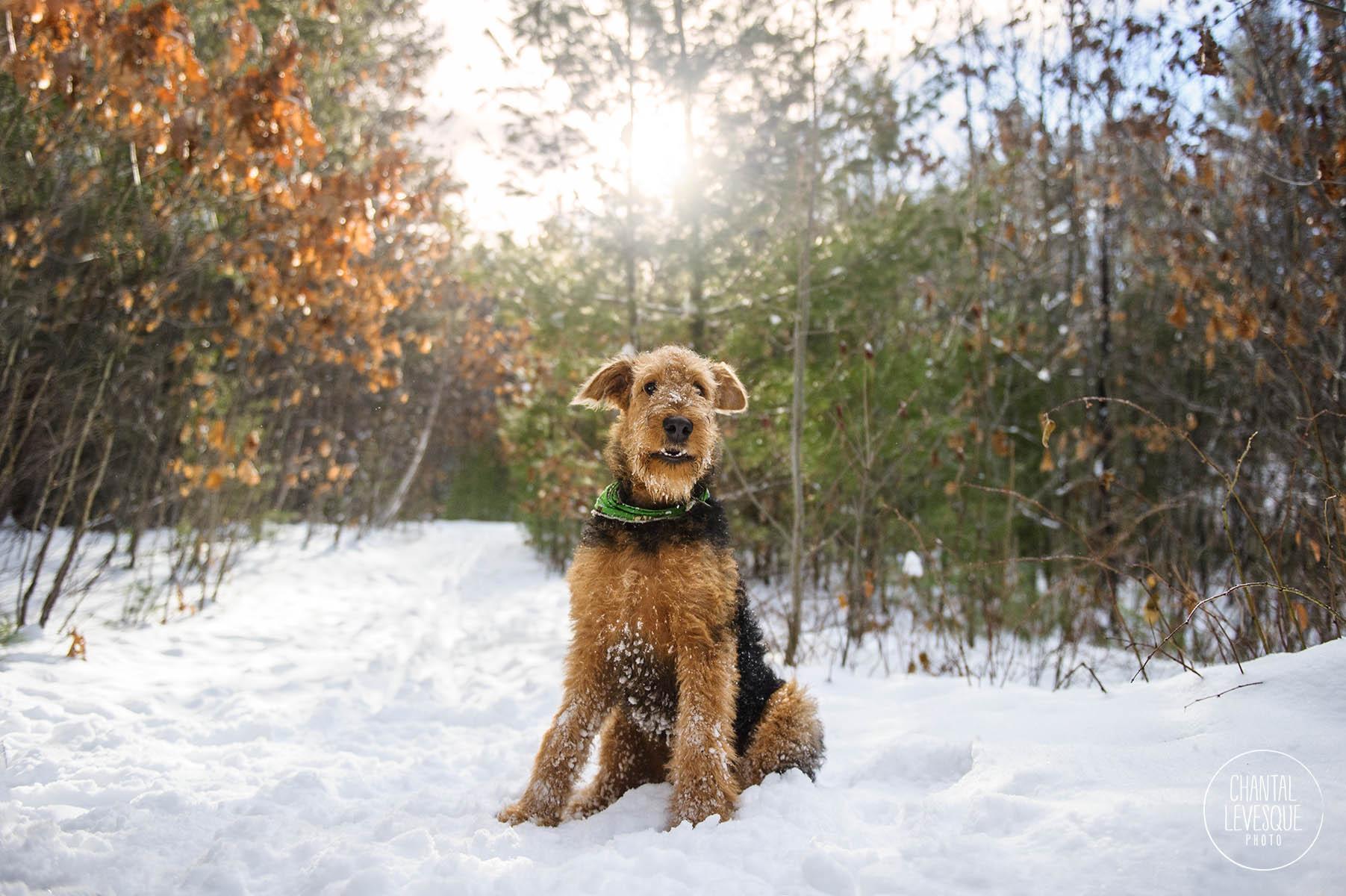 airdale-smile-winter-portrait.jpg