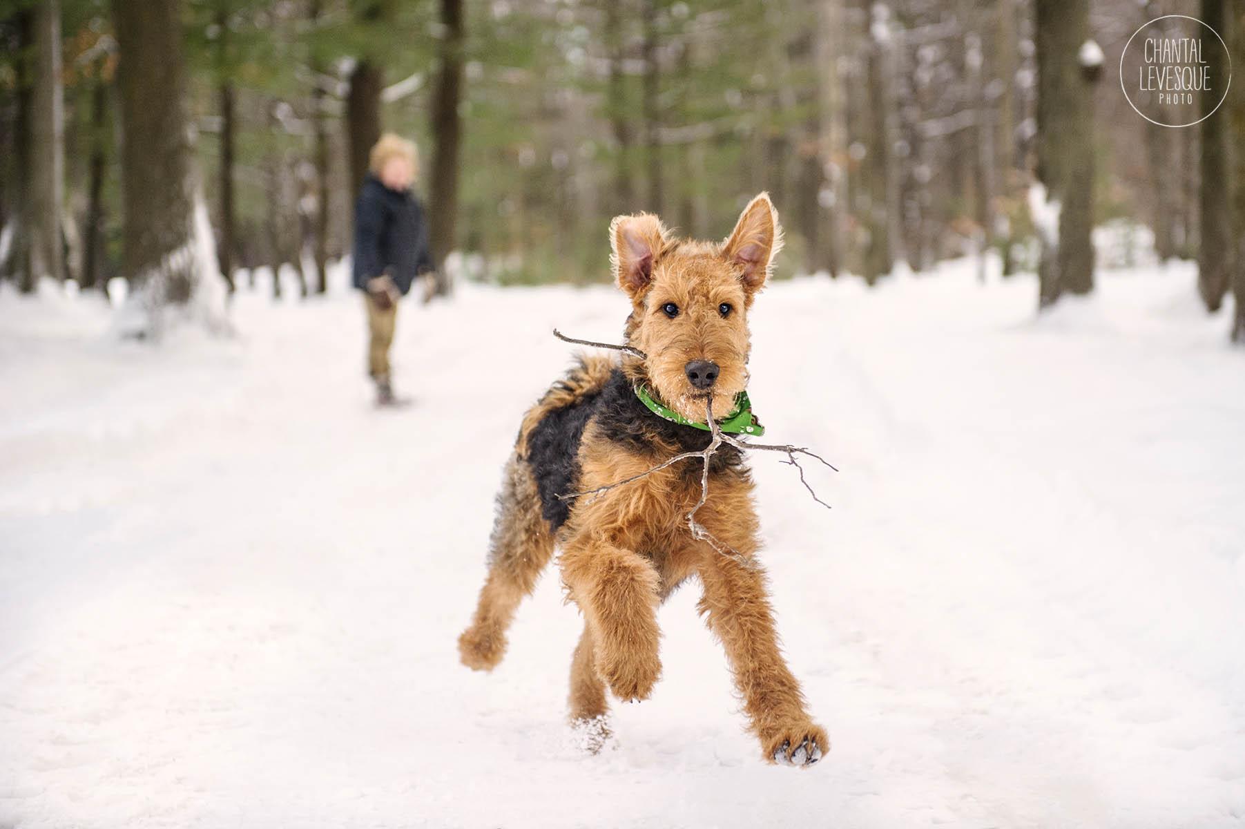 cute-dog-photo-quebec.jpg