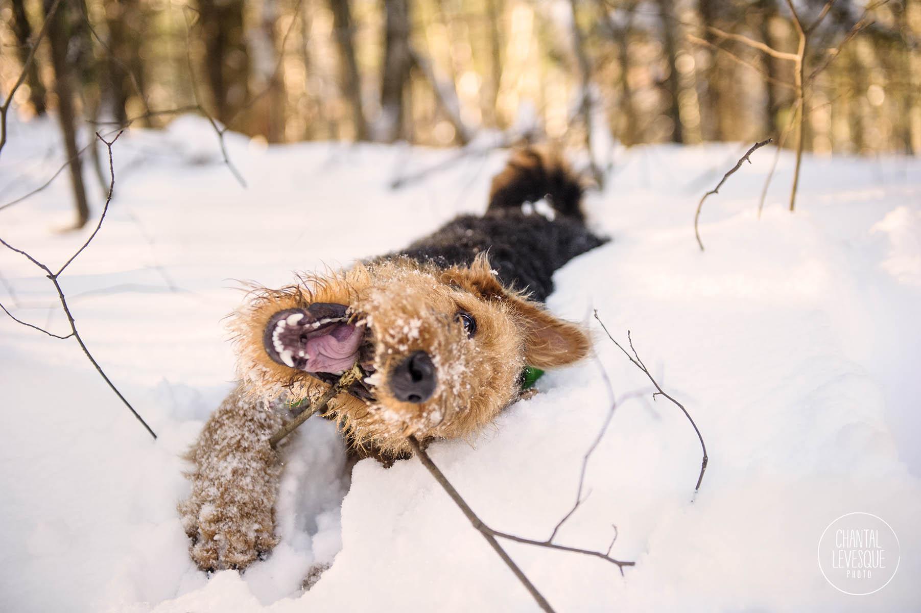 professional-puppy-photography-mtl.jpg