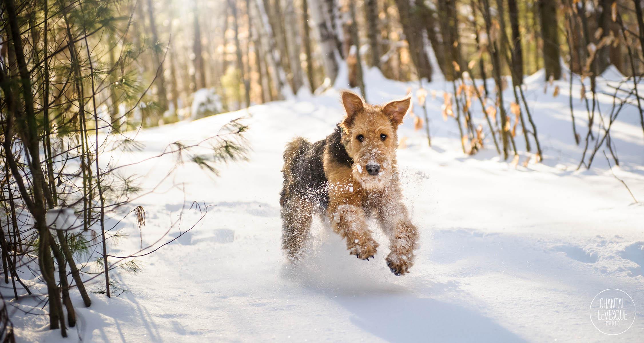 dog-running-snow-photography.jpg