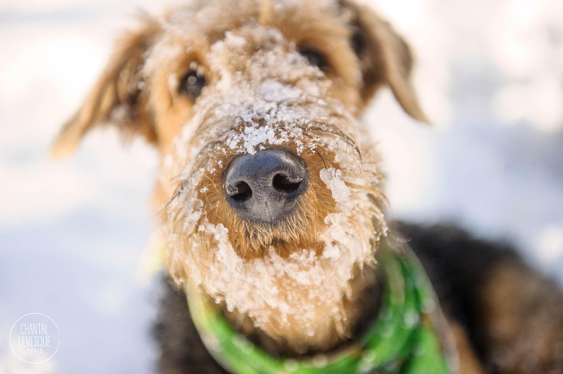 snow-snout-photography.jpg