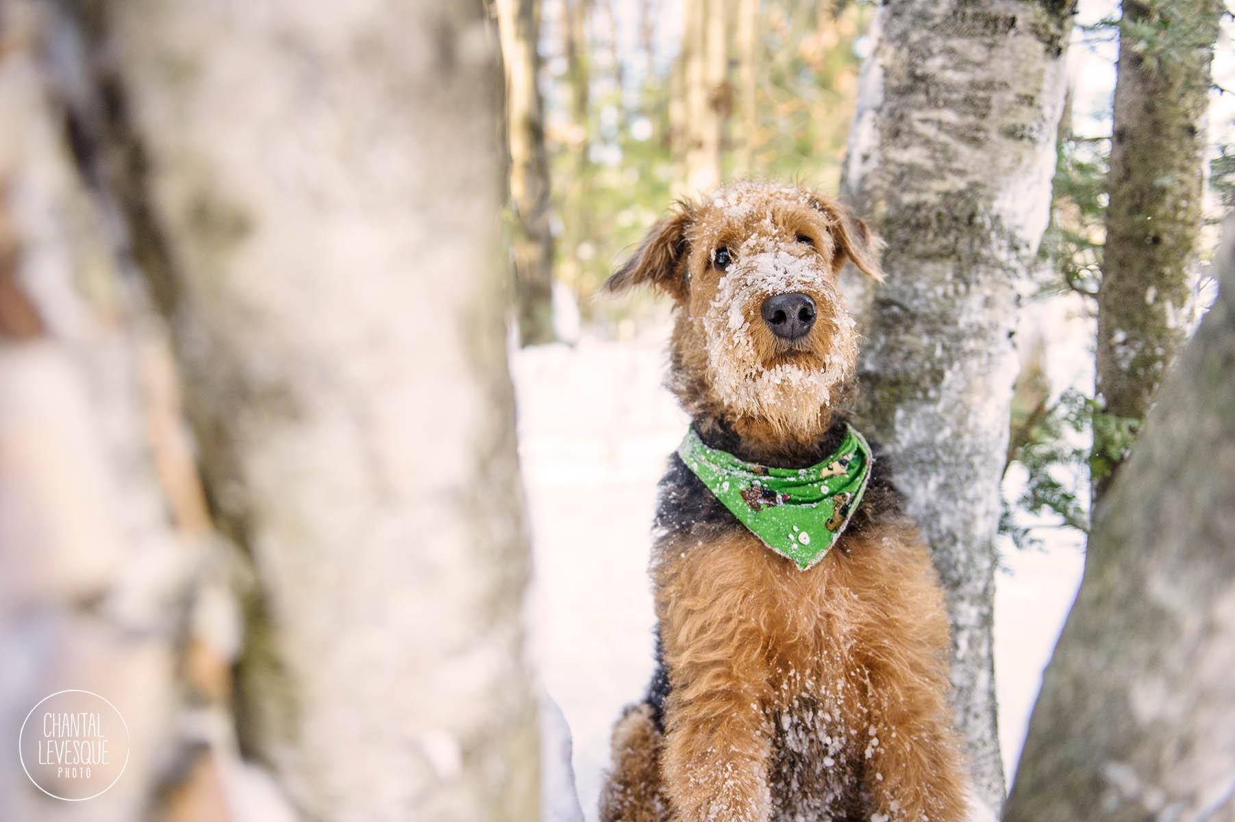 dog-portrait-winter.jpg