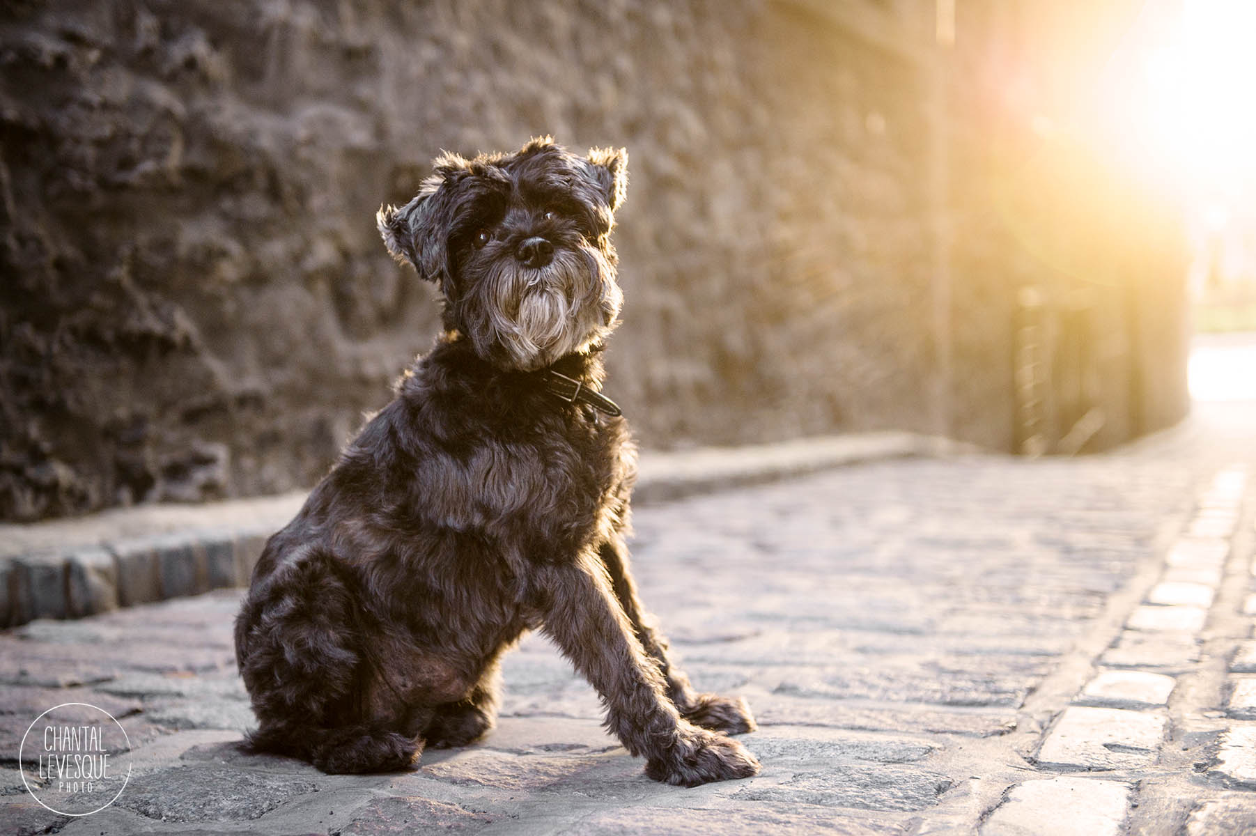 professional-dog-photographer-old-montreal.jpg