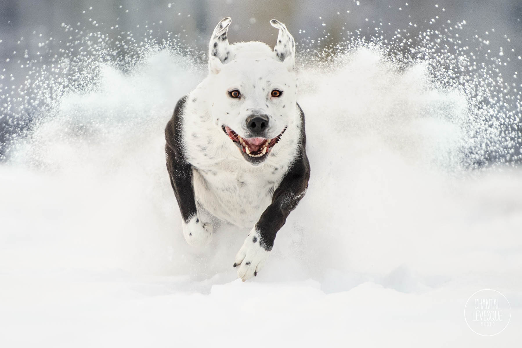 dog-action-photography-snow.jpg