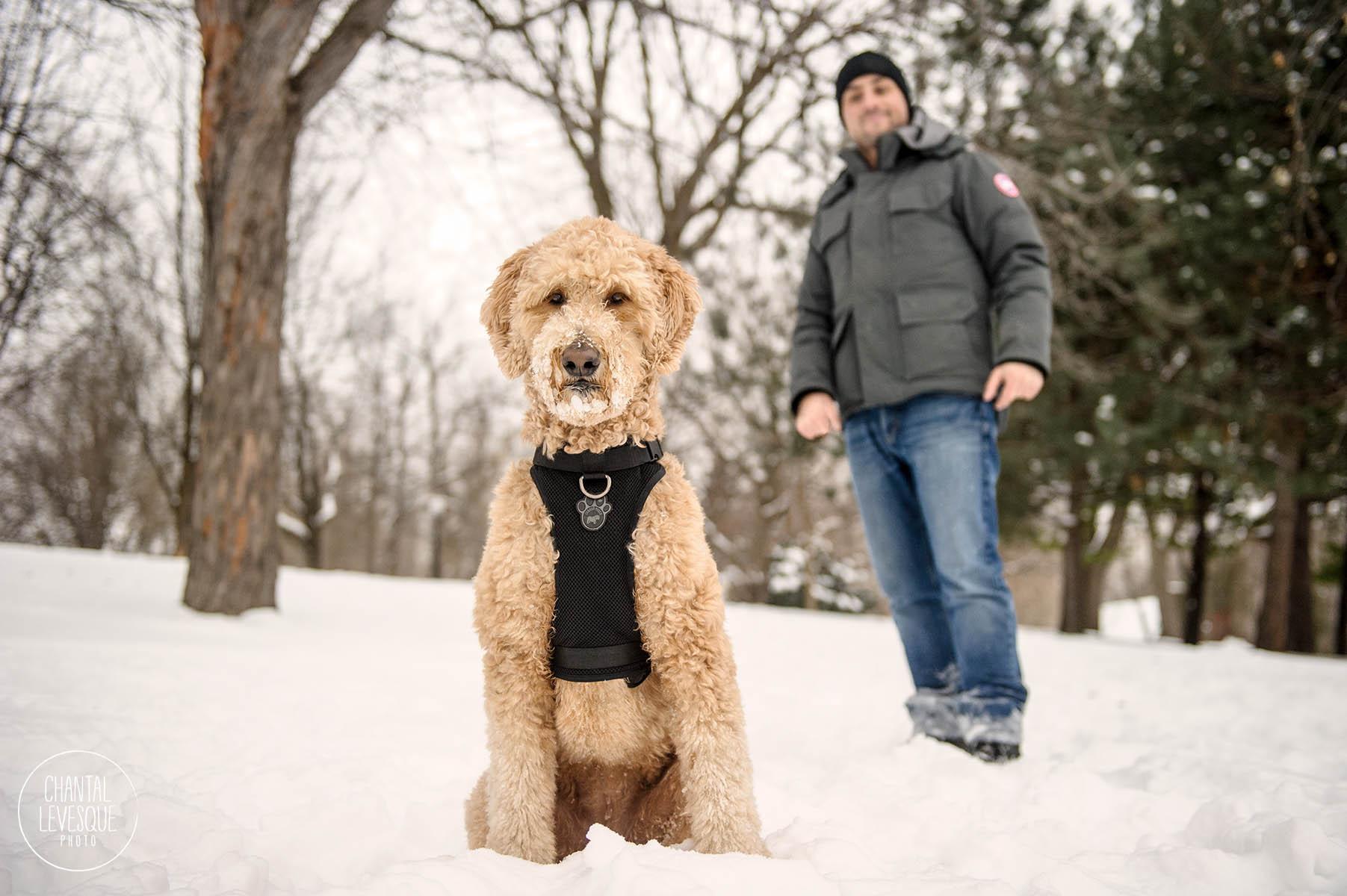 man-and-dog-photography-montreal.jpg