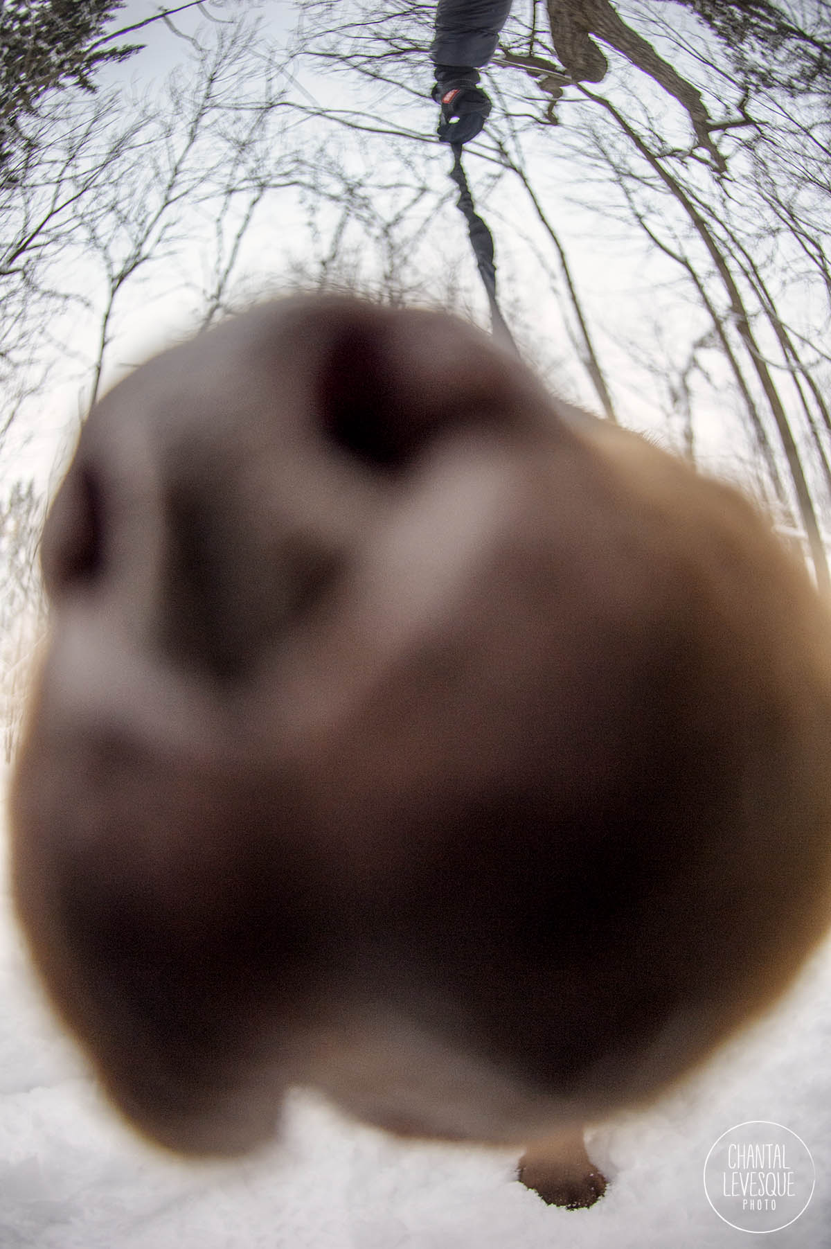 close-up-dog-snout-photo.jpg