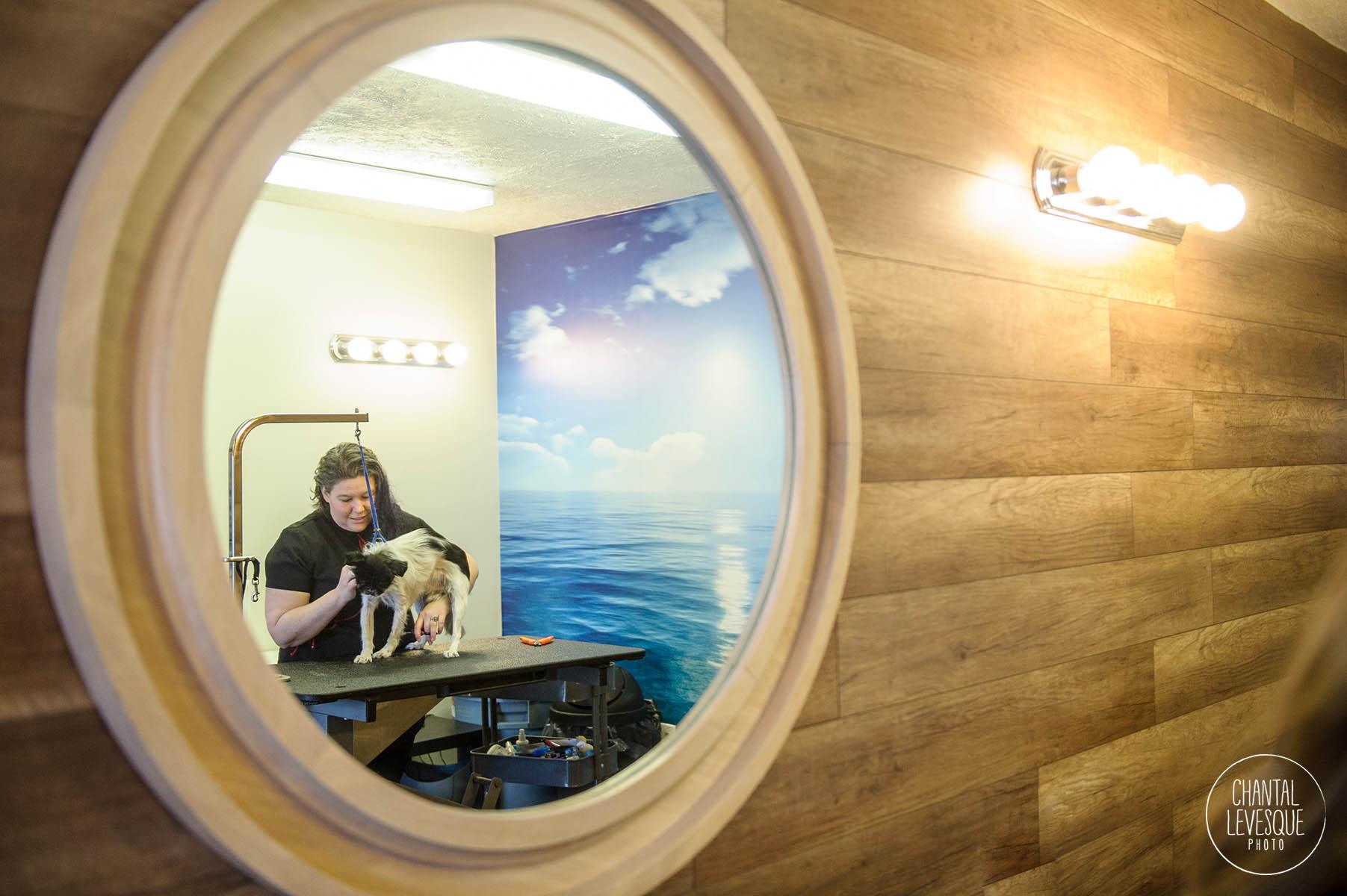 dog-spa-treatment-rosemont.jpg