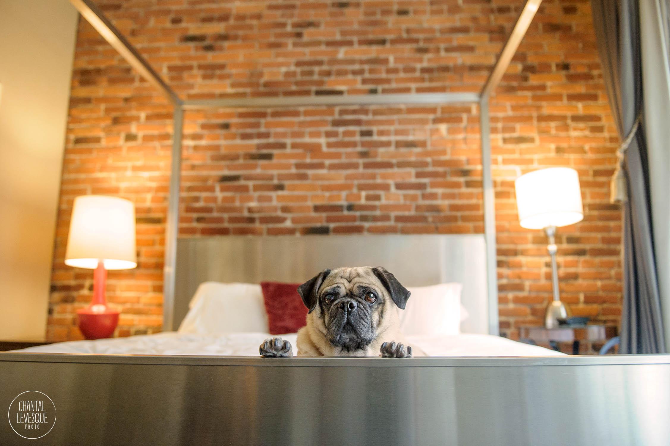hotel-alexis-suite-pug.jpg