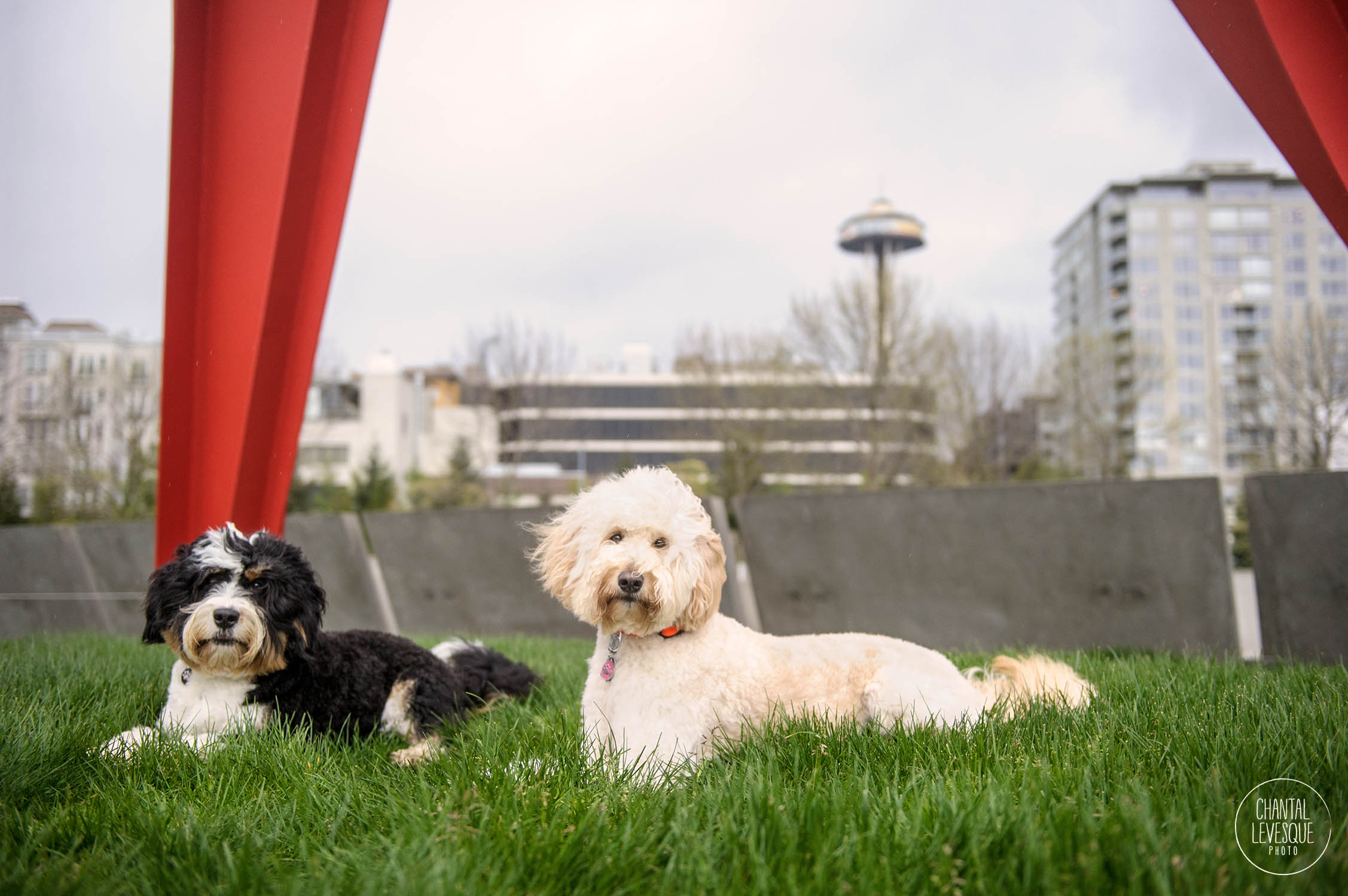 doodles-photography-seattle