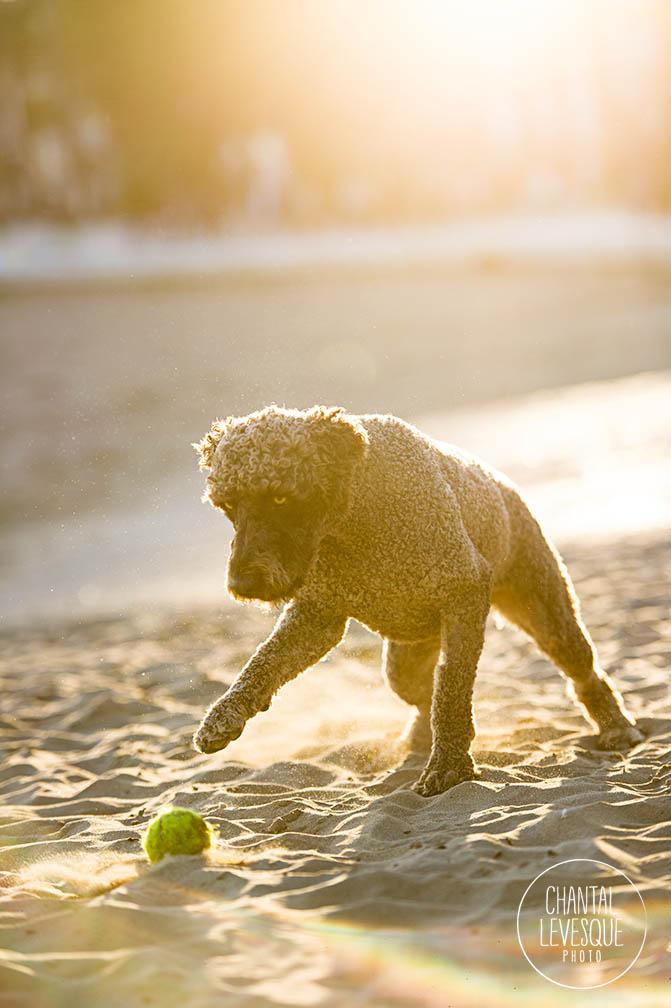 golden-hour-beach-dog-photograher.jpg