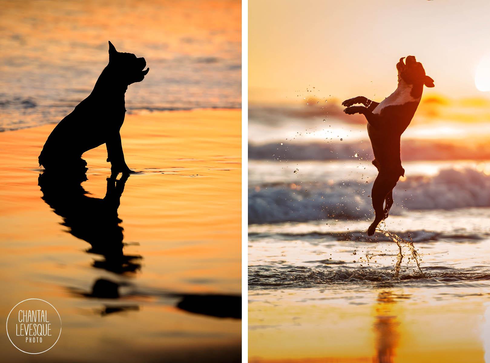 dog-beach-sunset-photographer.jpg