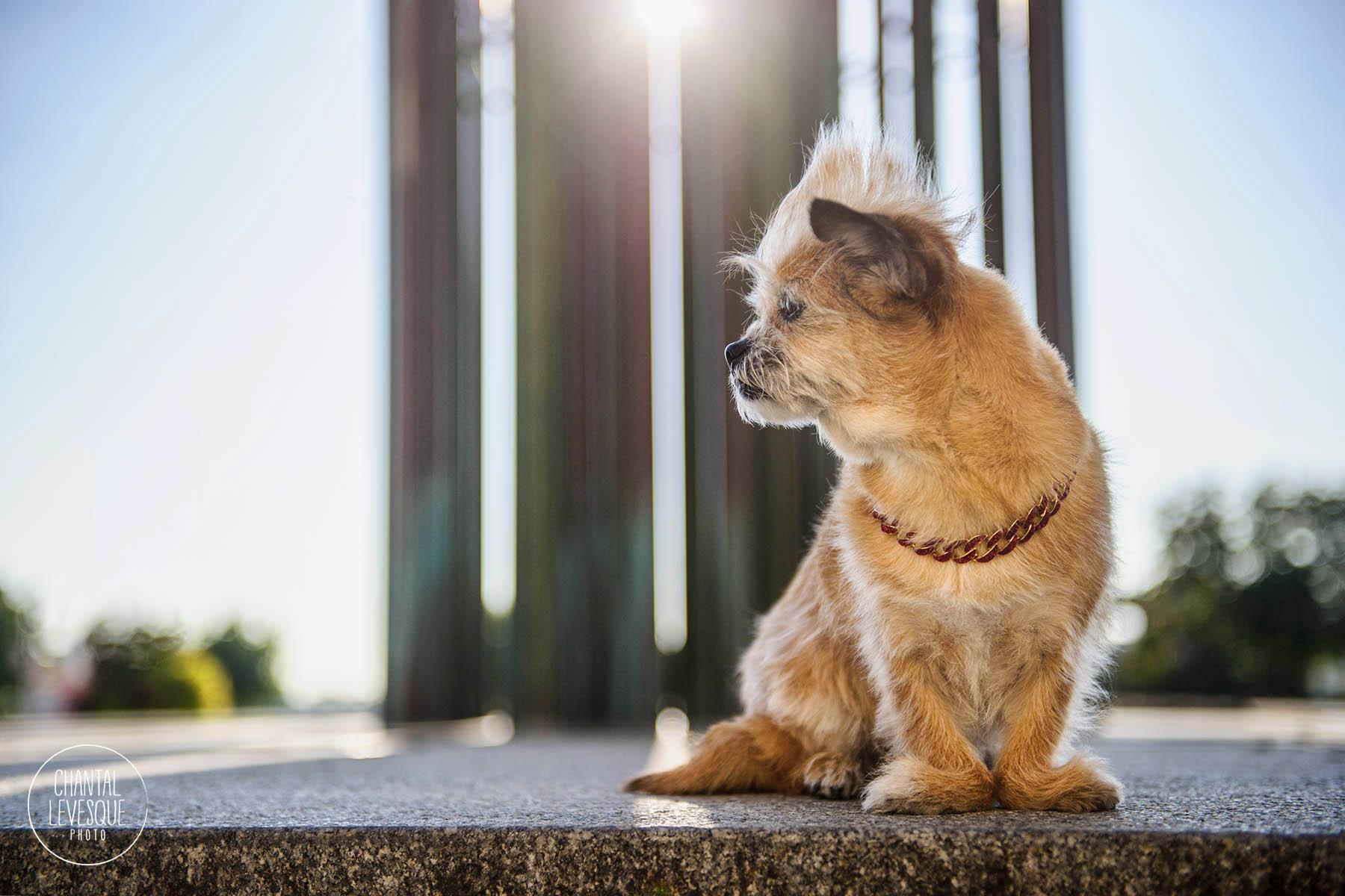 urban-dog-photo-shoot-sunrise-old-mtl.jpg