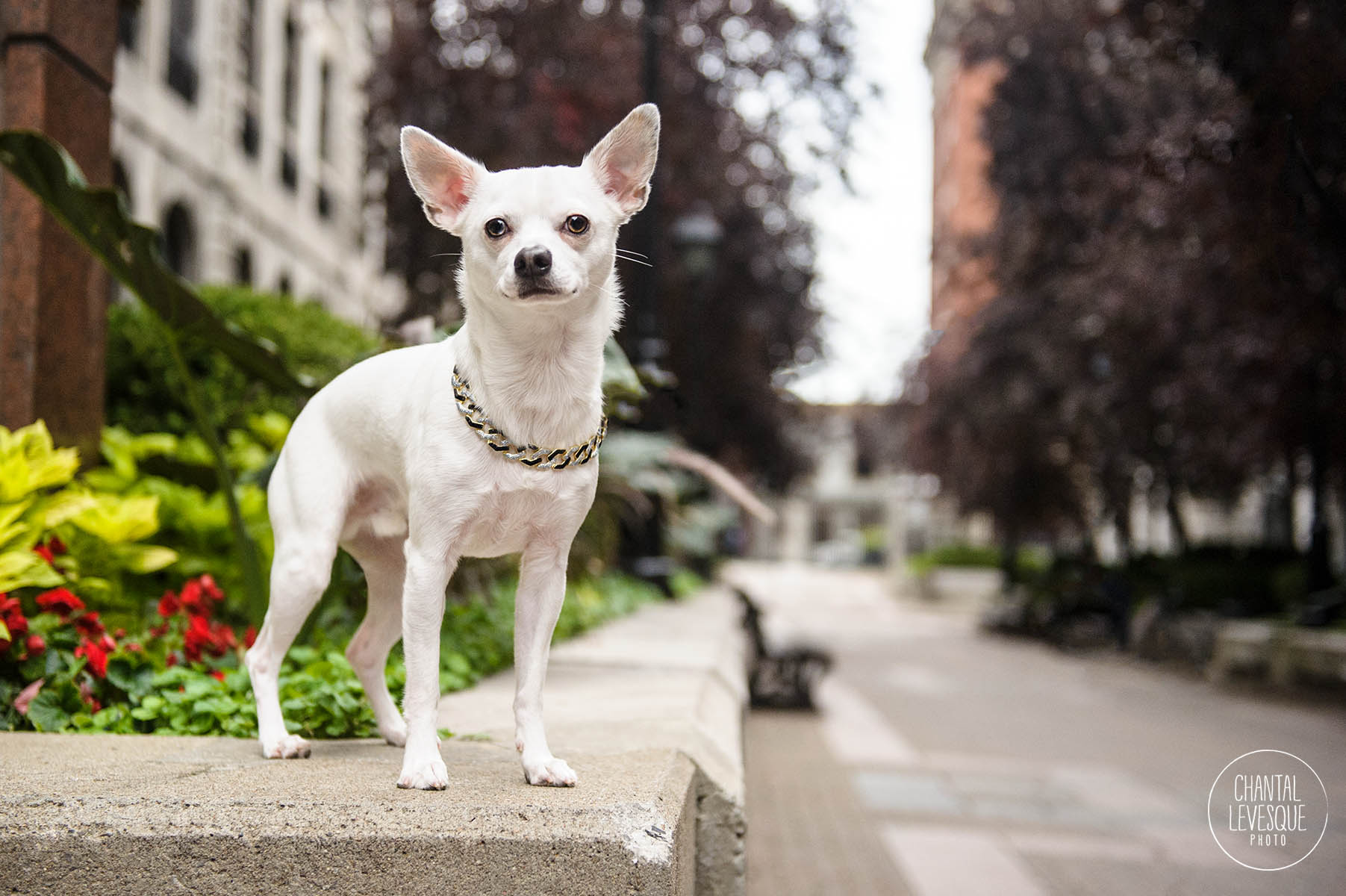 commercial-dog-photography-montreal.jpg