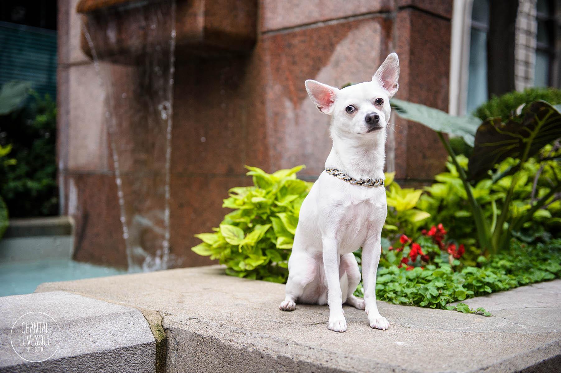 old-montreal-dog-photography.jpg