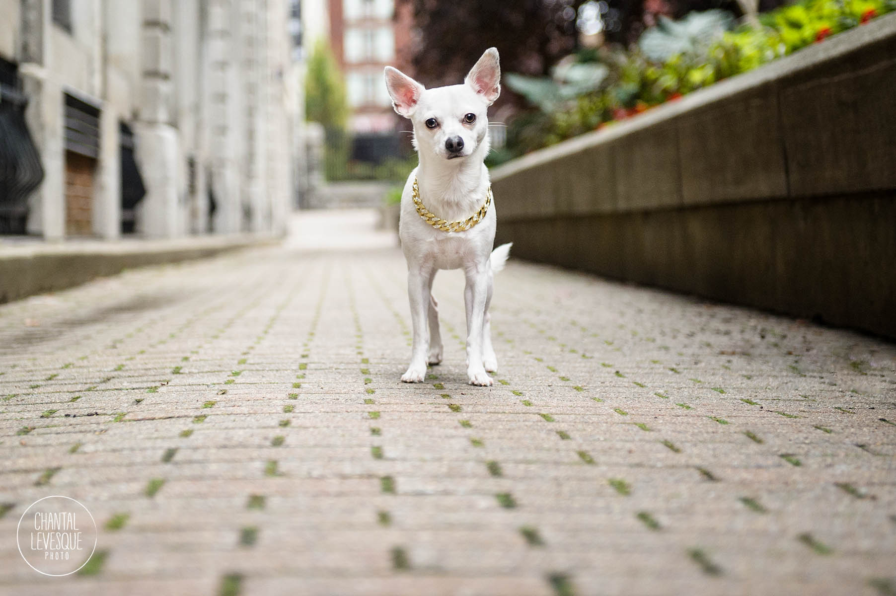 dog-product-photography-canada.jpg