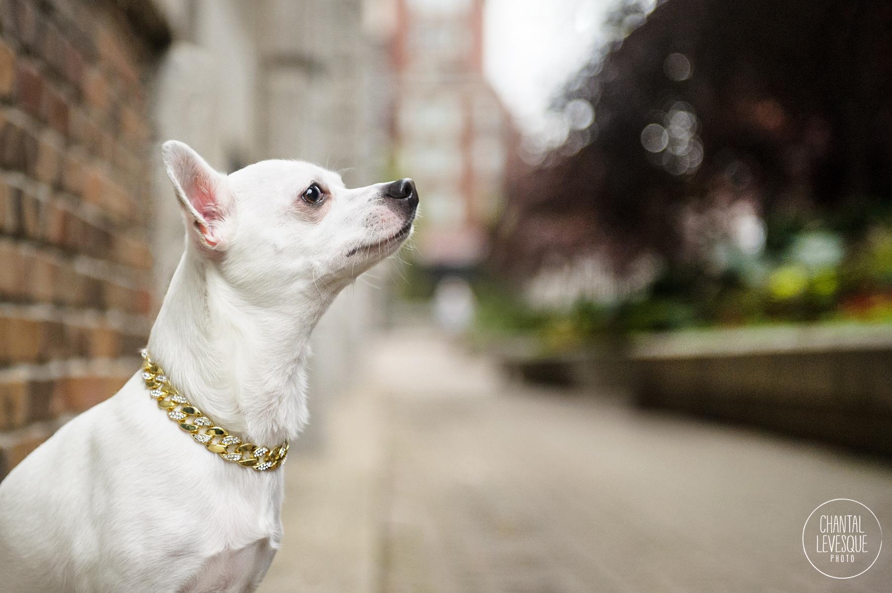 puppy-fashion-photographer.jpg