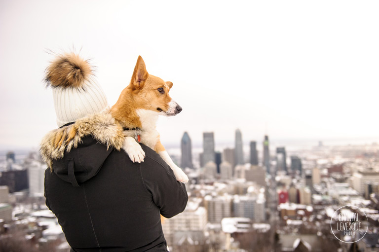 mont-royal-view-dog-photography.jpg