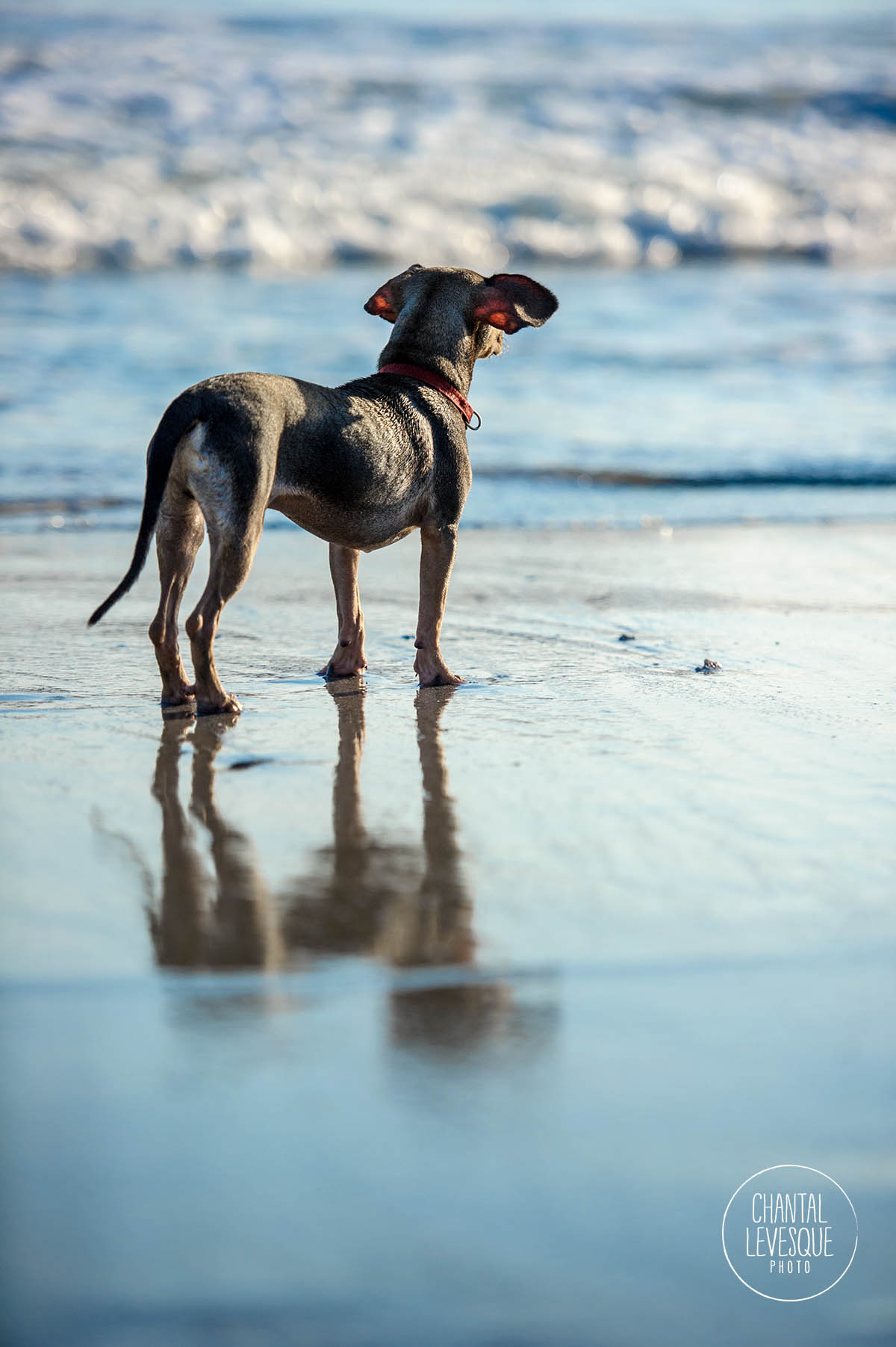 mutt-ocean-photography.jpg