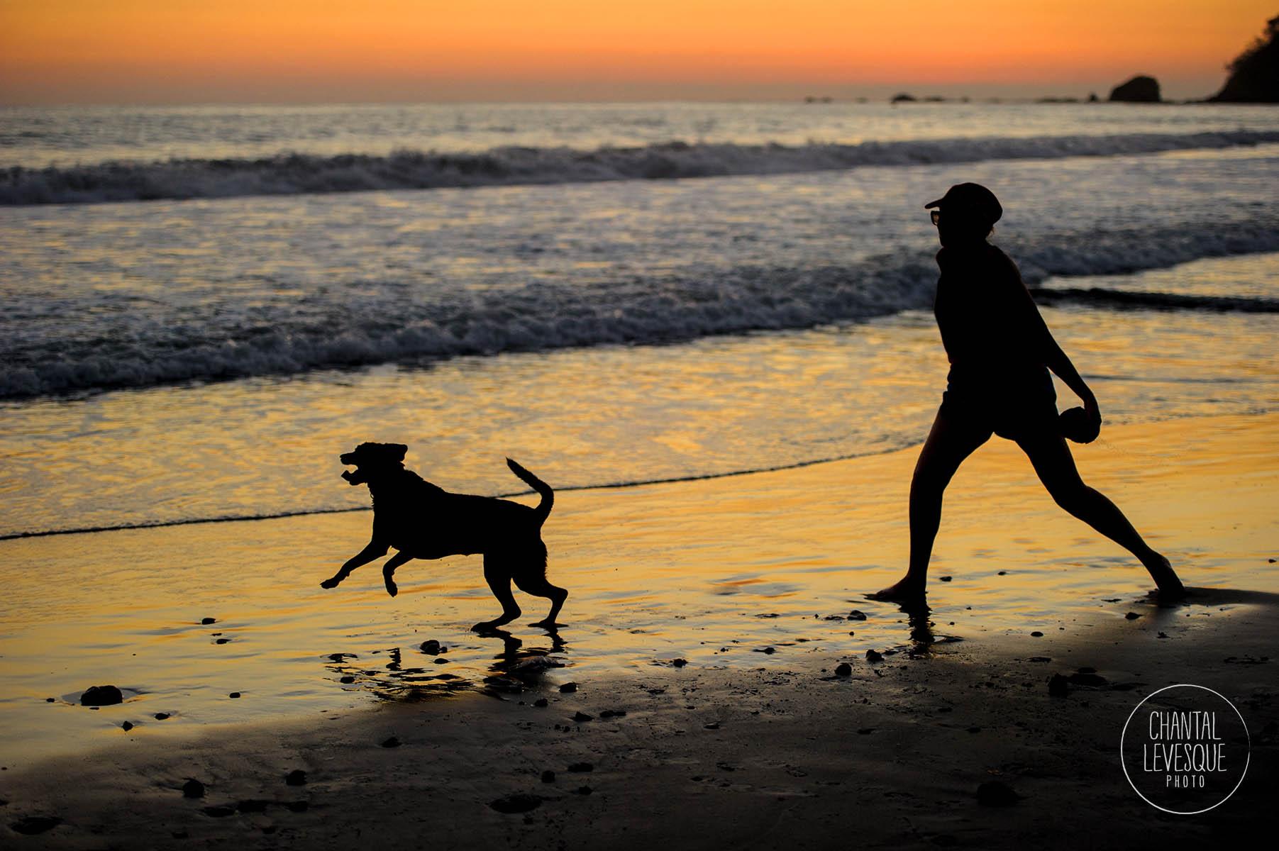lifestyle-dog-photography.jpg