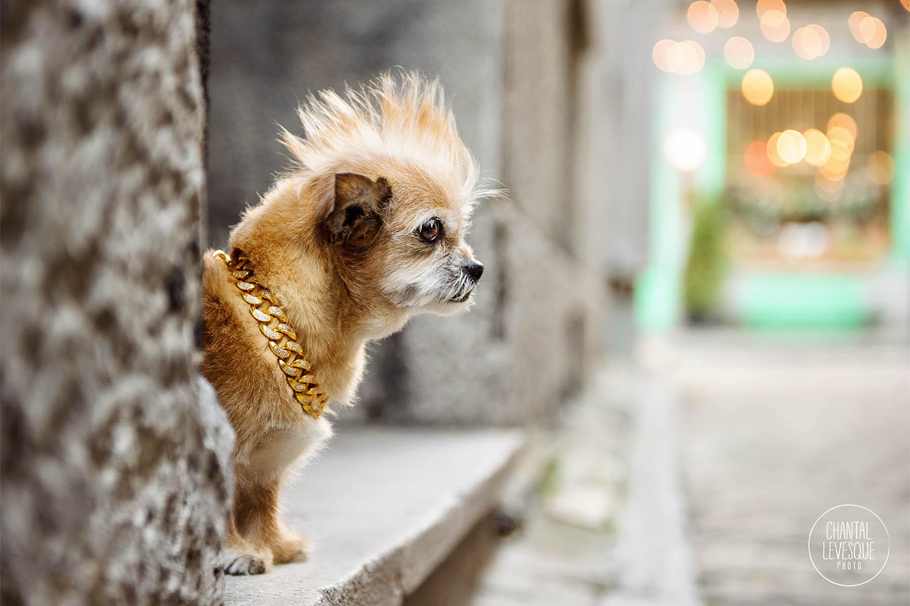 rockstar-dog-photo-session-montreal.jpg