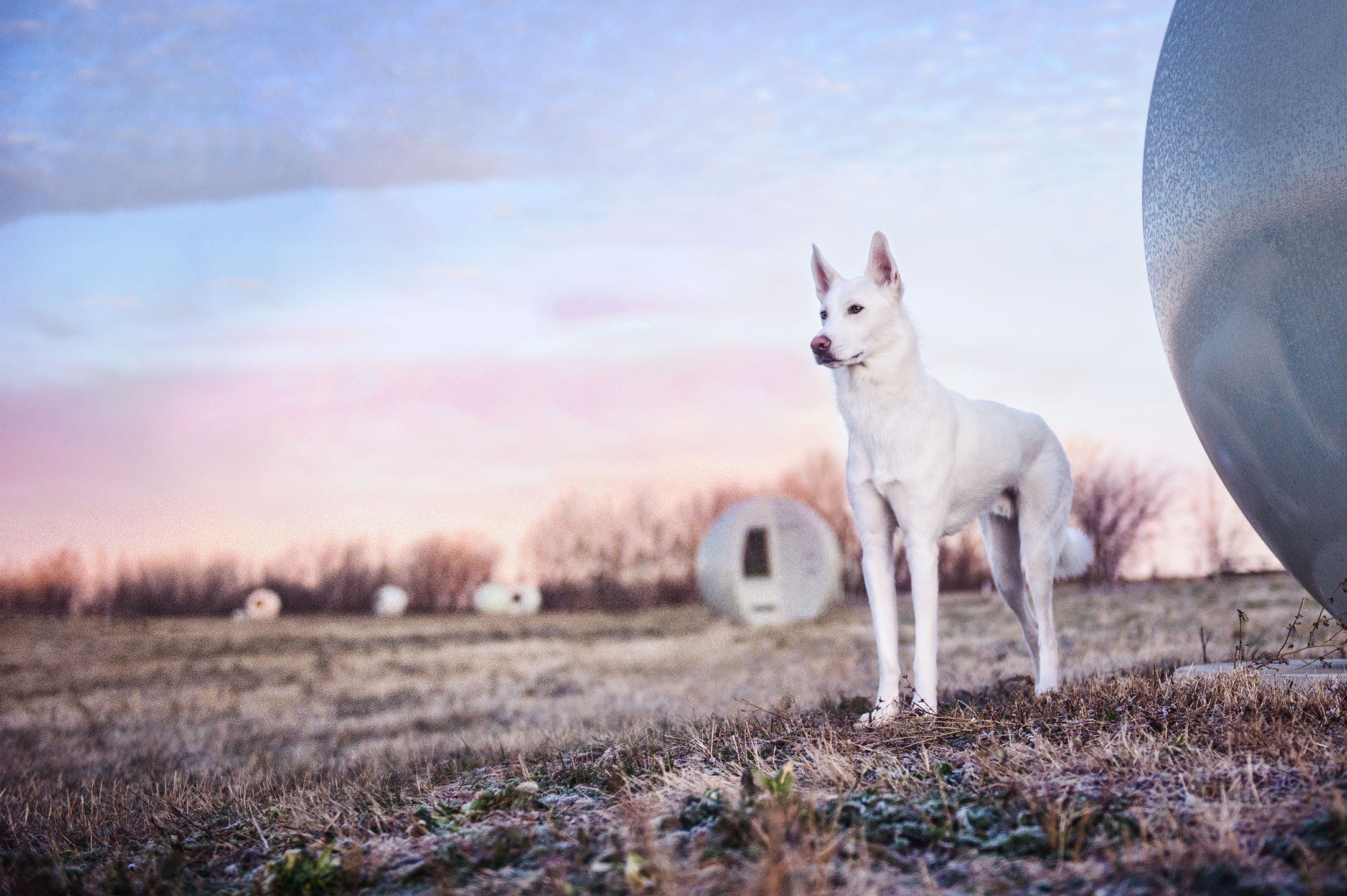 sci-fi-dog-photography-montreal-4014.jpg