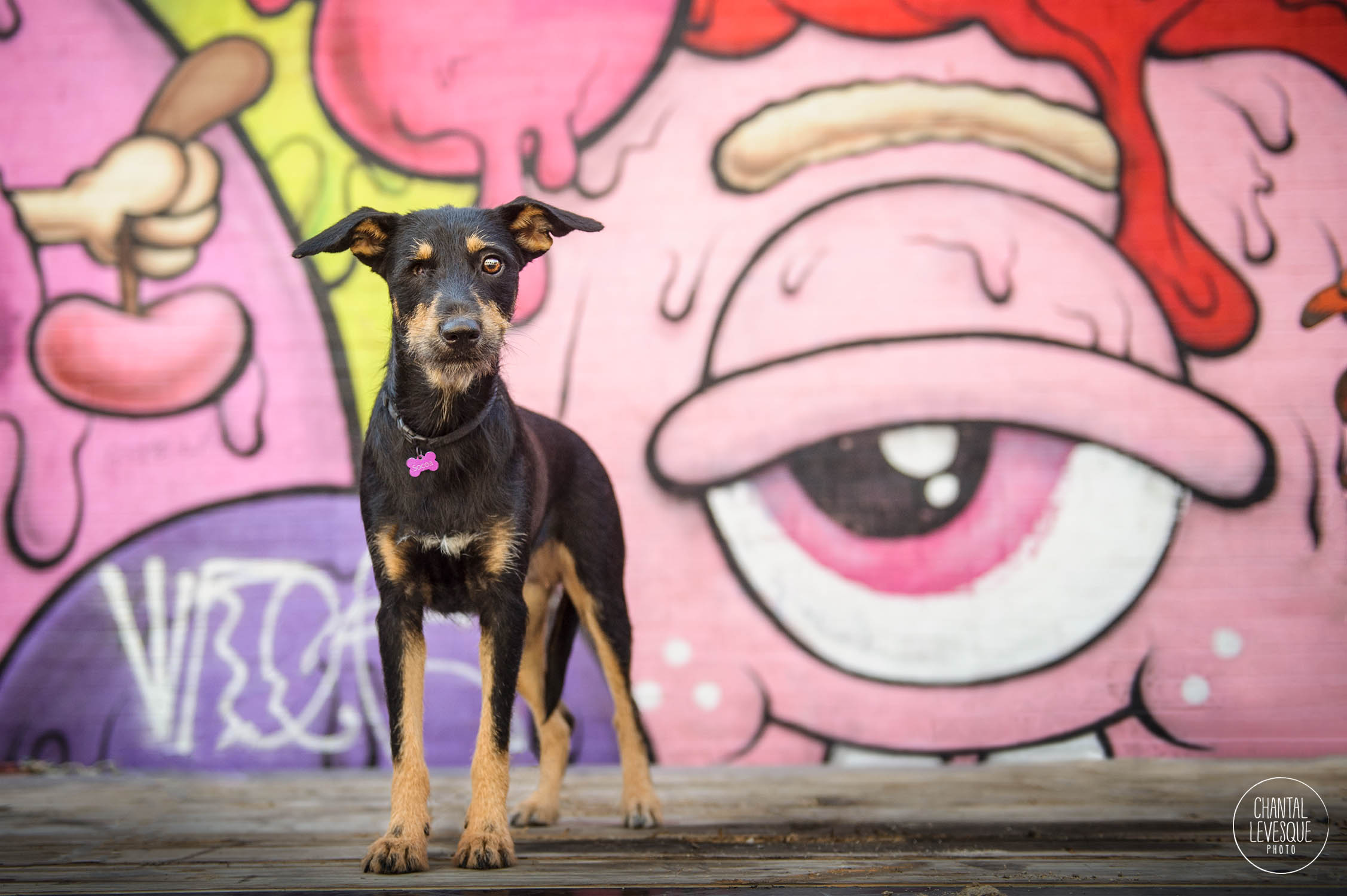 one-eyed-mutt-pjhotography-montreal