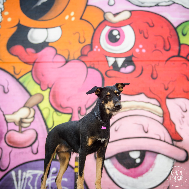 street-dog-photography.jpg