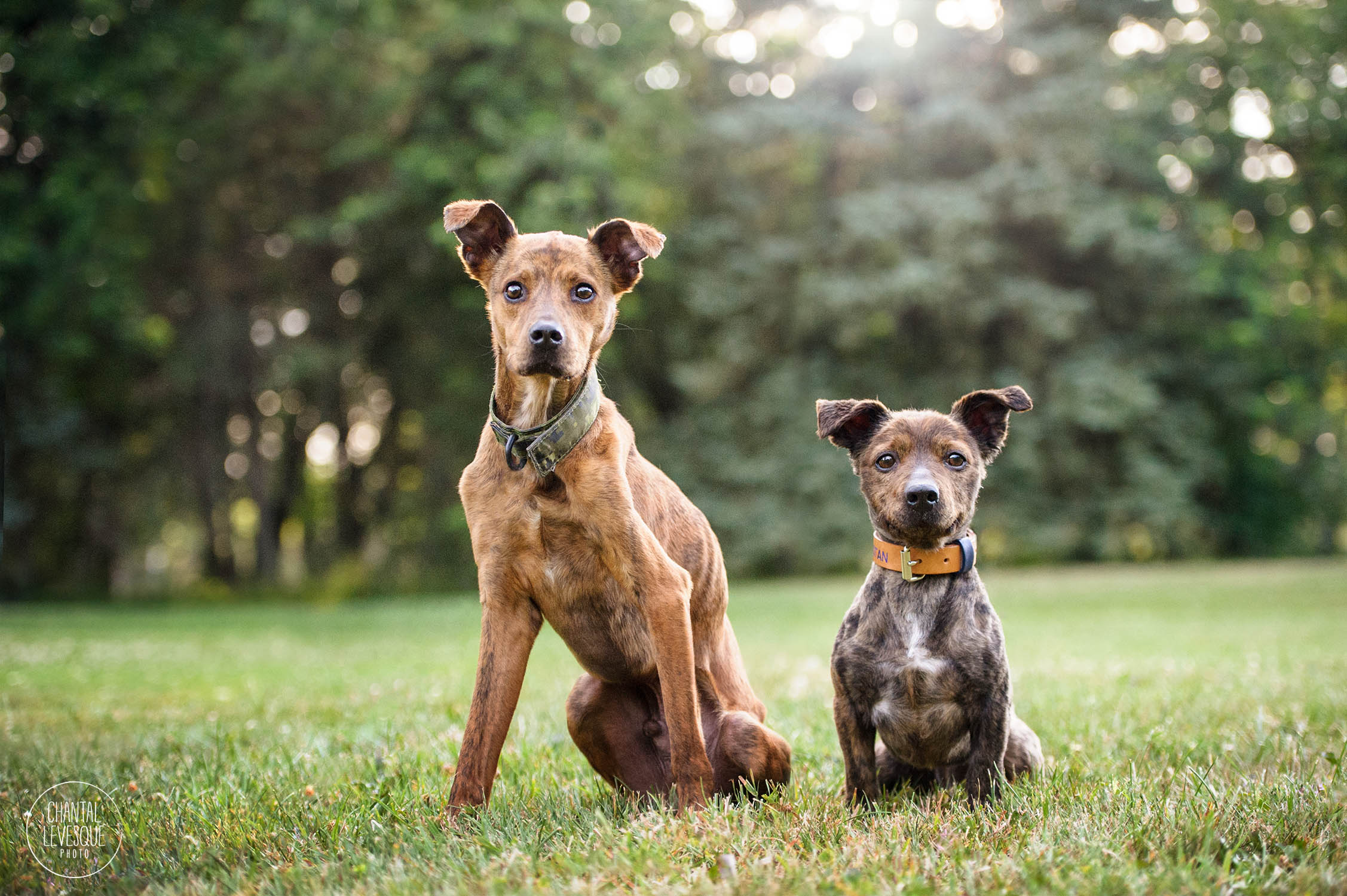 two-mutts-adoption-success-stories-montreal.jpg