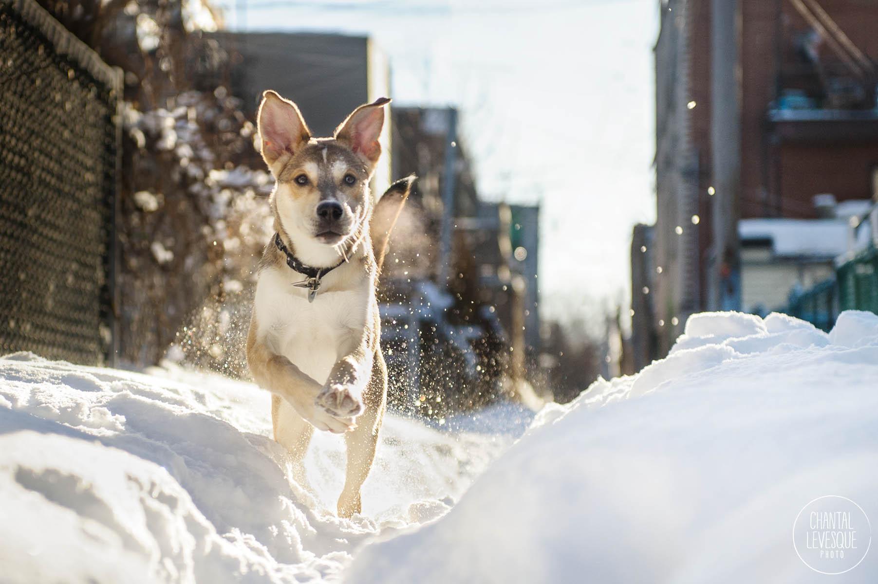 puppy-running-snow.jpg