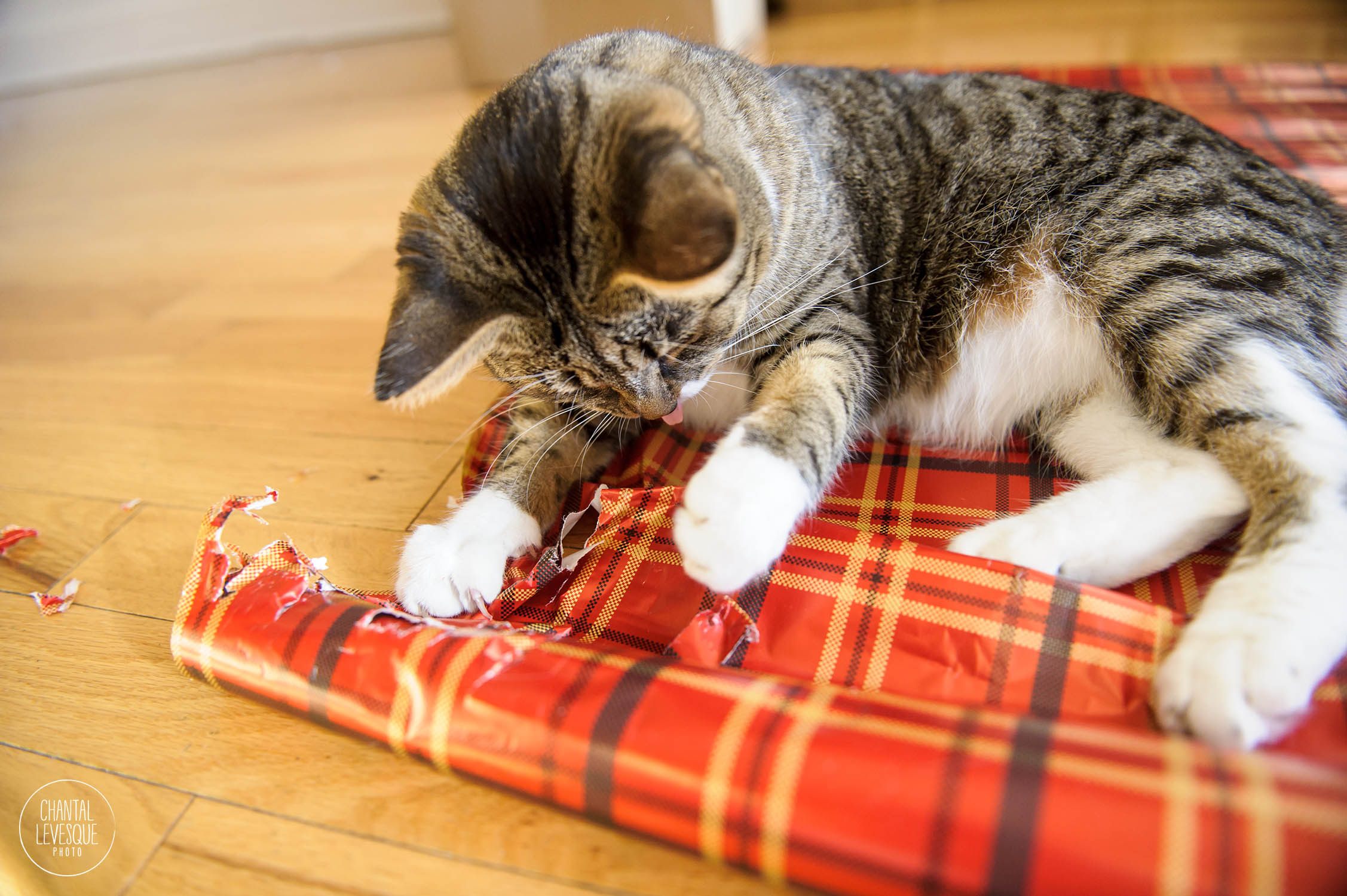cat-play-wrapping-paper-Xmas.jpg