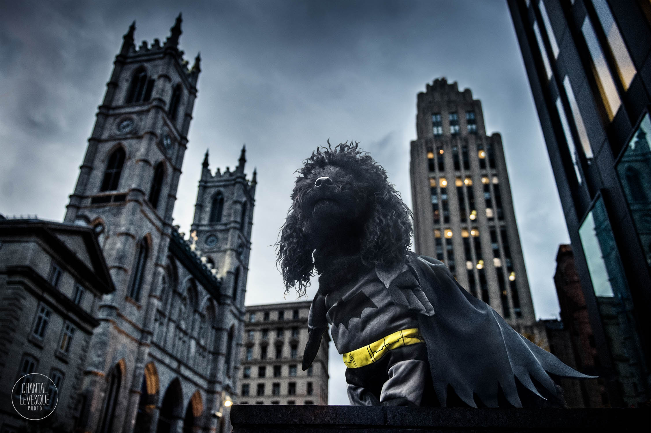 Pisko-Batman-0987-web.jpg