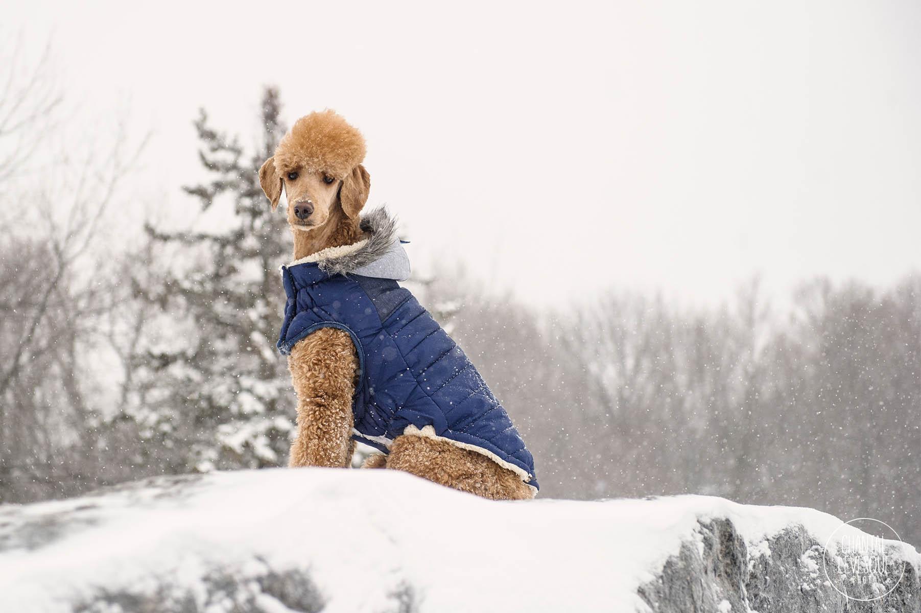 GF-Pet-winter-18-6926-web.jpg