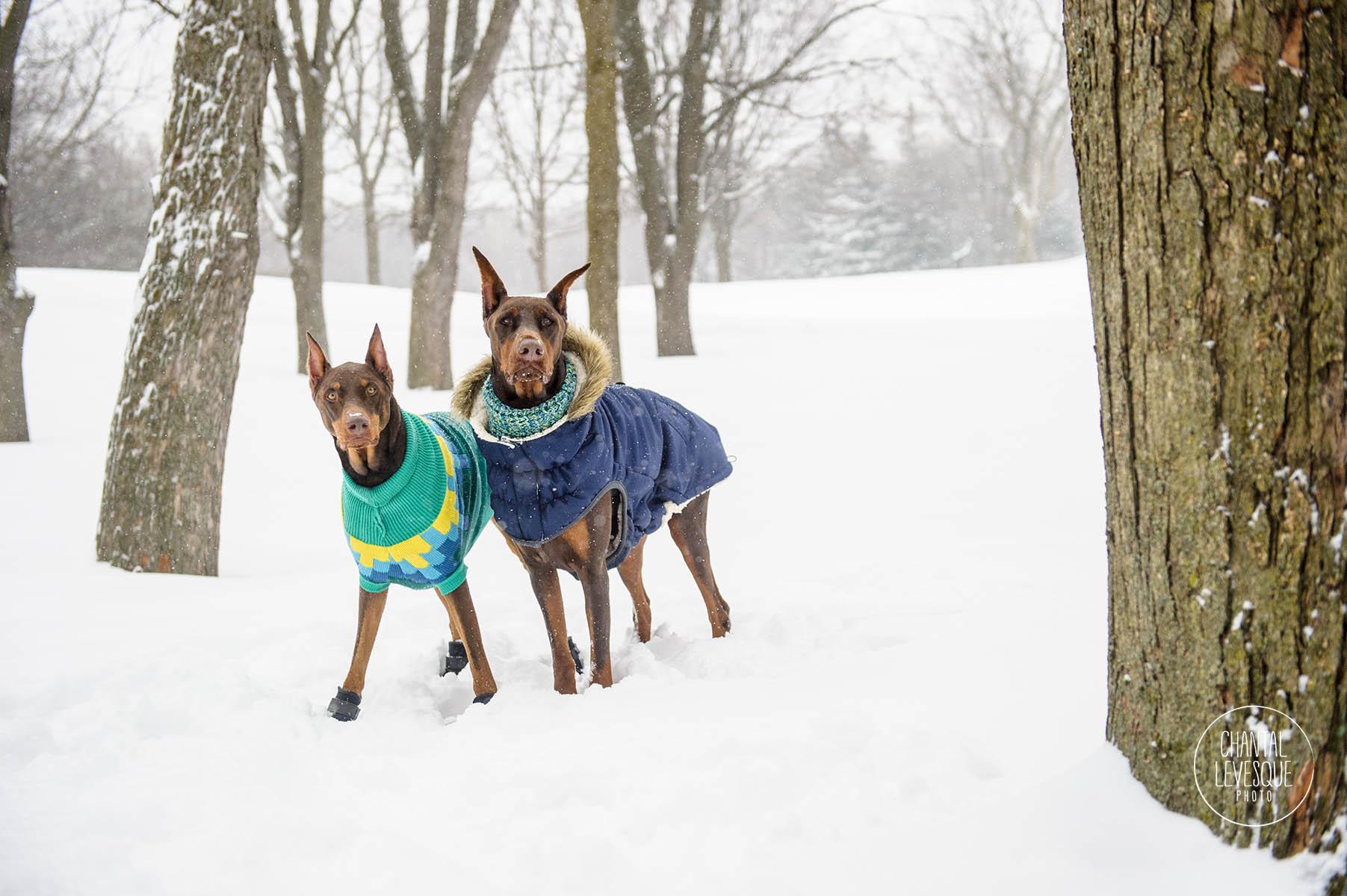 GF-Pet-winter-18-6396-web.jpg
