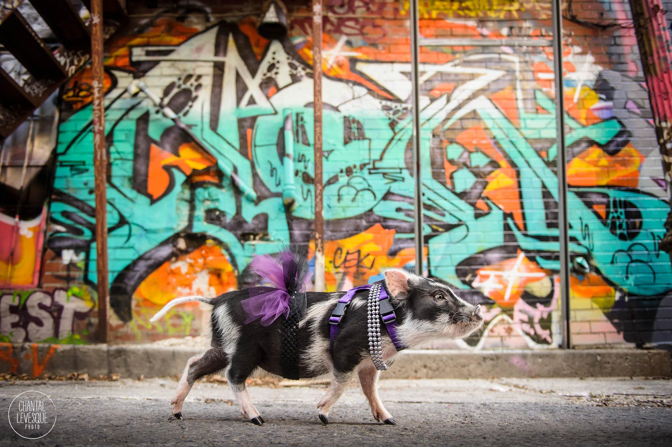 Fluffy-grafitti-5986-web.jpg