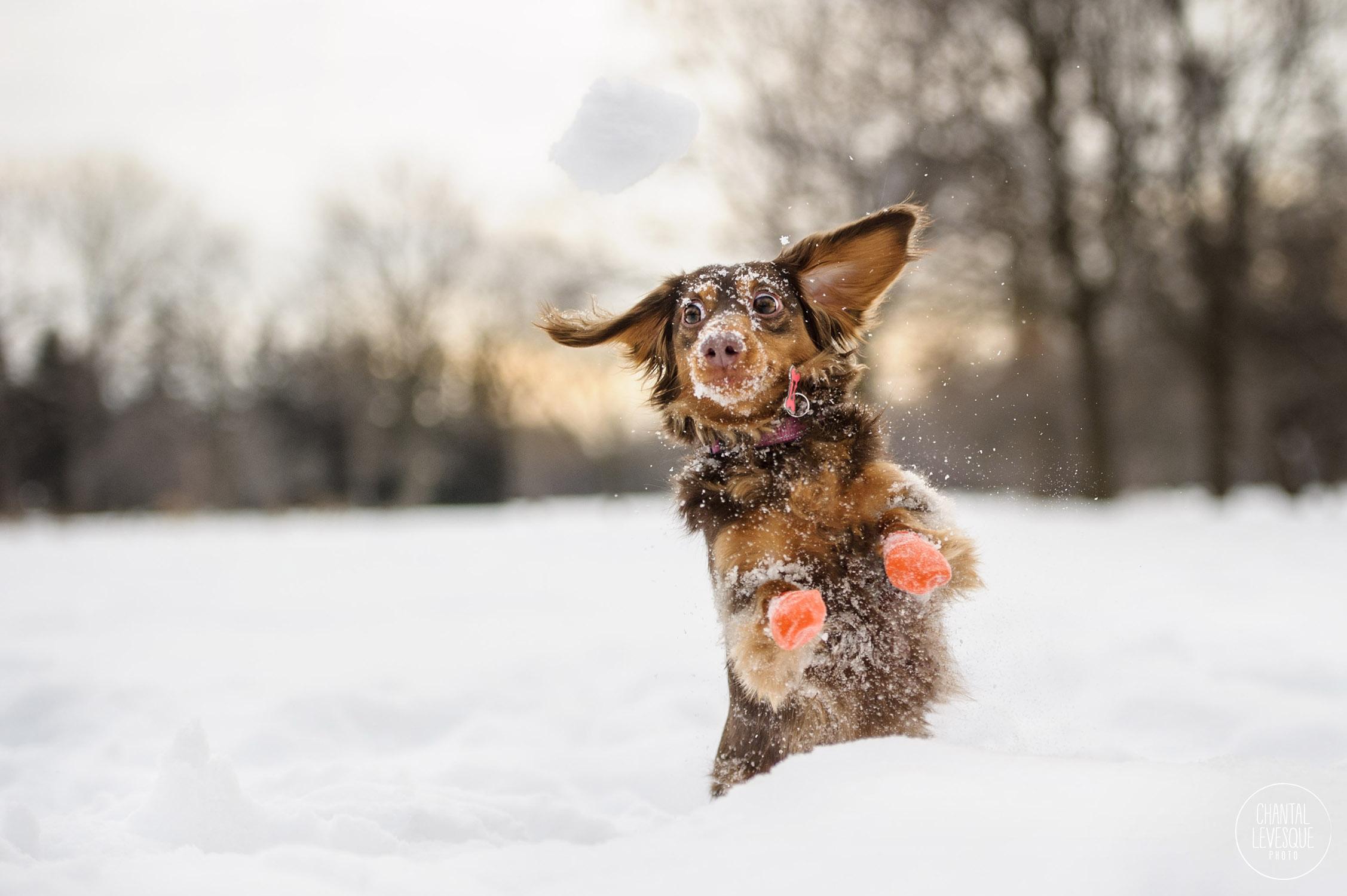 Quand tu sais que la balle de neige s'en vient vers toi mais que tu la perds de vue…