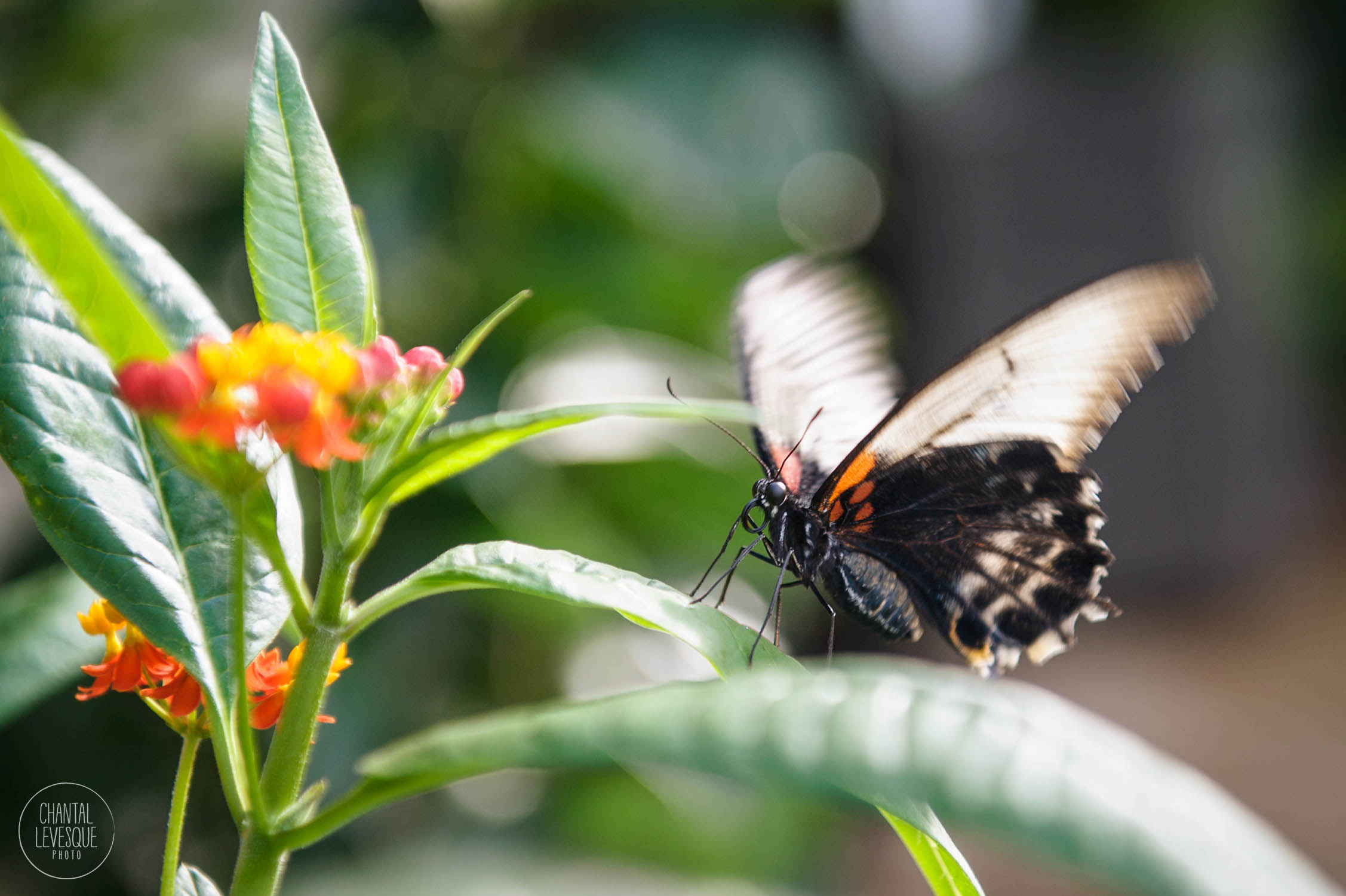 papillons-3495 copy.jpg