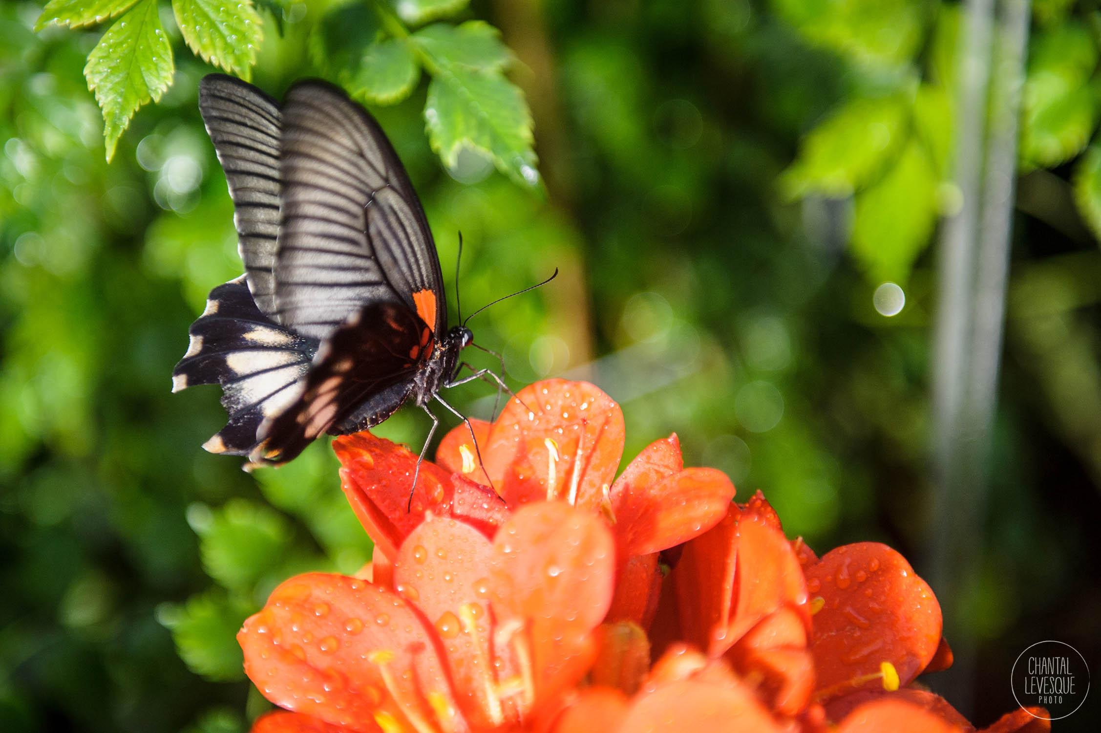 papillons-3508 copy.jpg