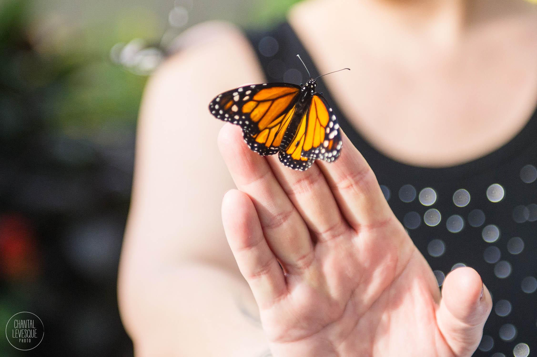 papillons-3604 copy.jpg
