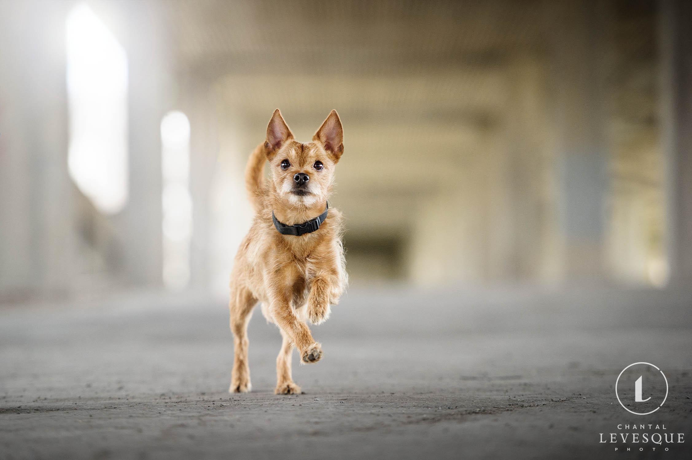 terrier-mix-running.jpg