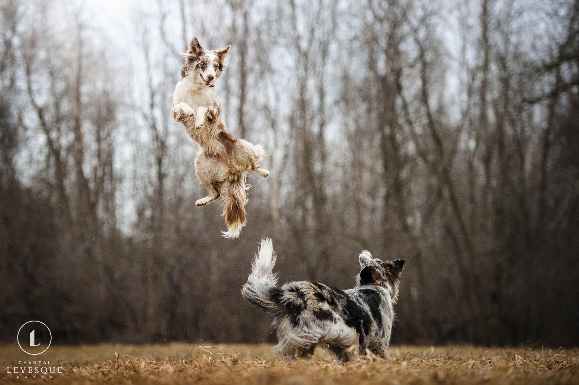 action-dog-photography.jpg